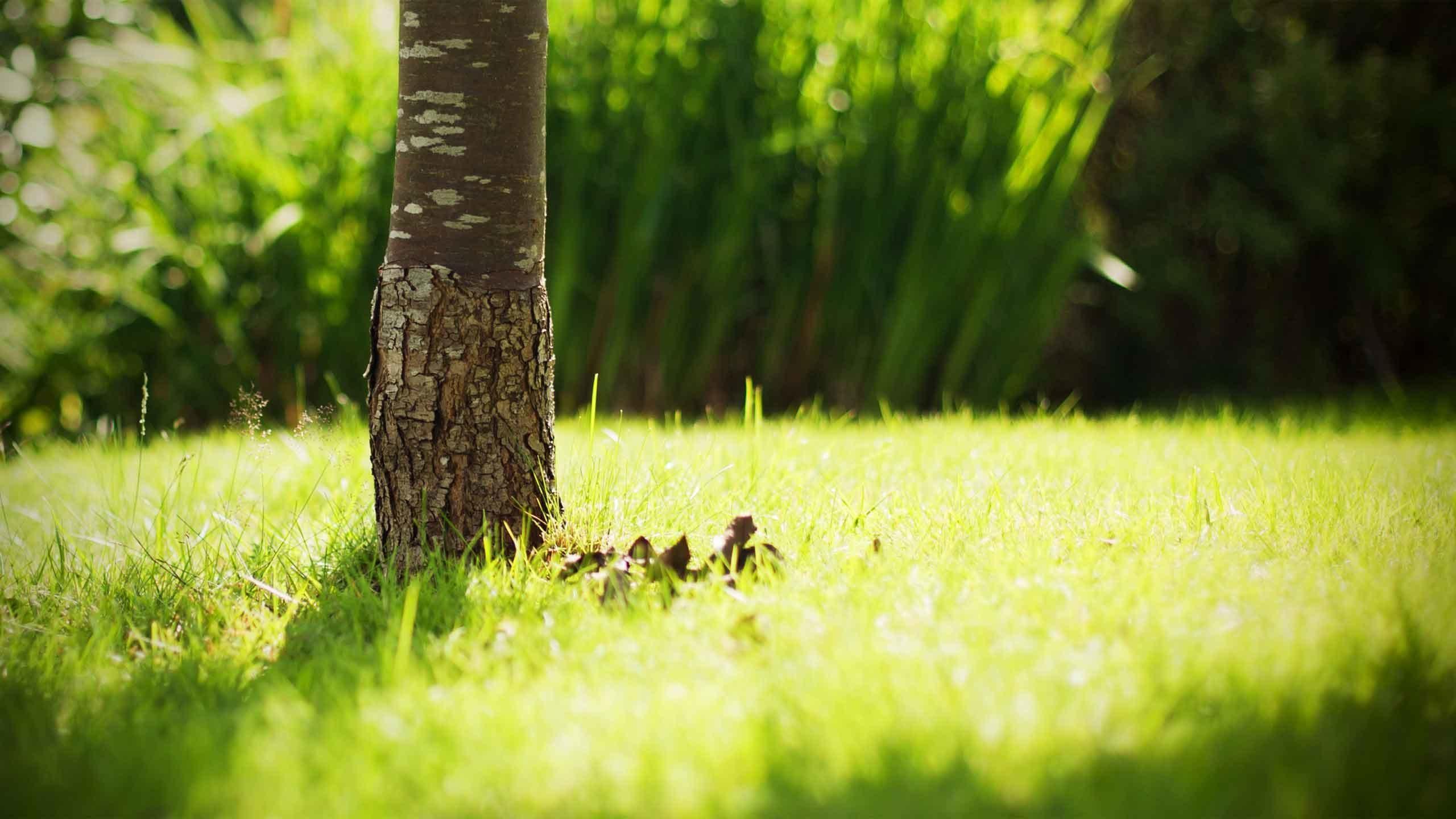 Tree desktop background - Nature wallpaper collection zip ...