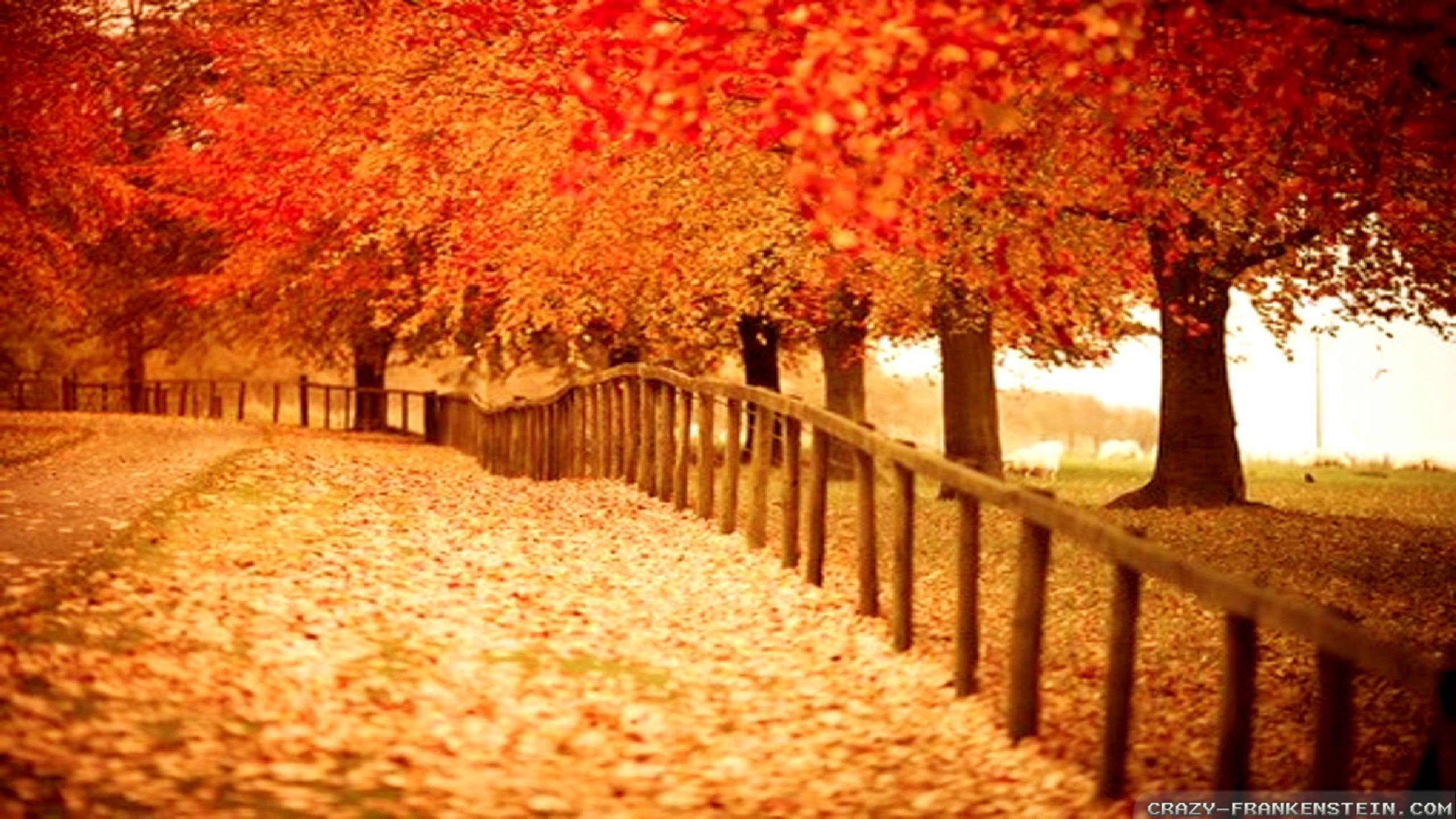 42 Autumn Backgrounds Download Free Stunning Hd: Autumn Pictures For Desktop Backgrounds ·① WallpaperTag