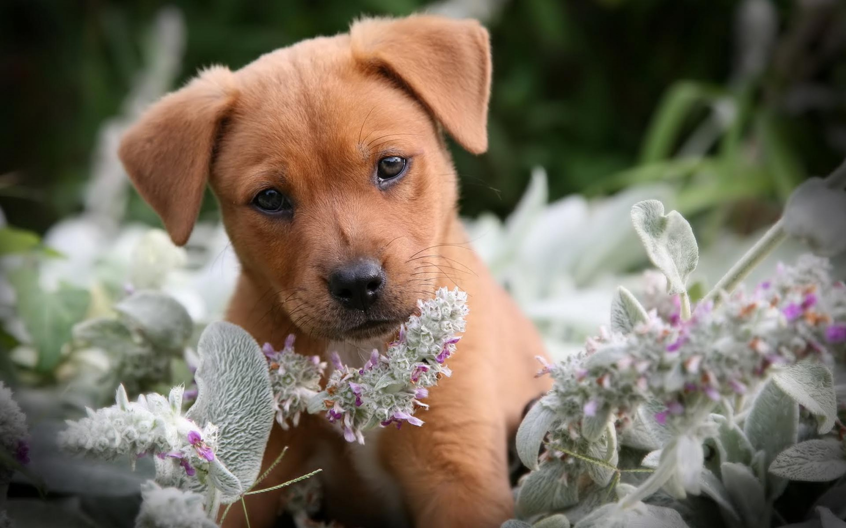 Funny Puppy Wallpapers ·① WallpaperTag