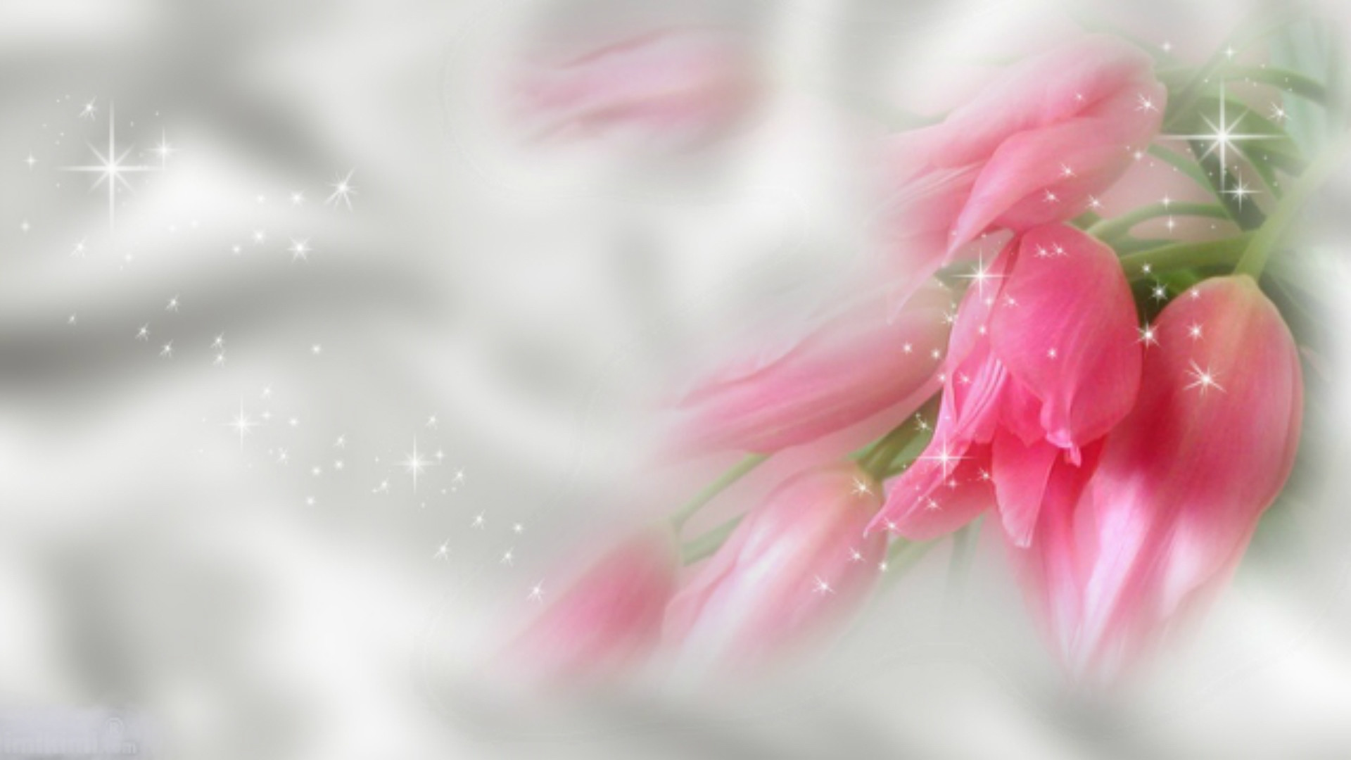 pink flower desktop wallpaper 183��