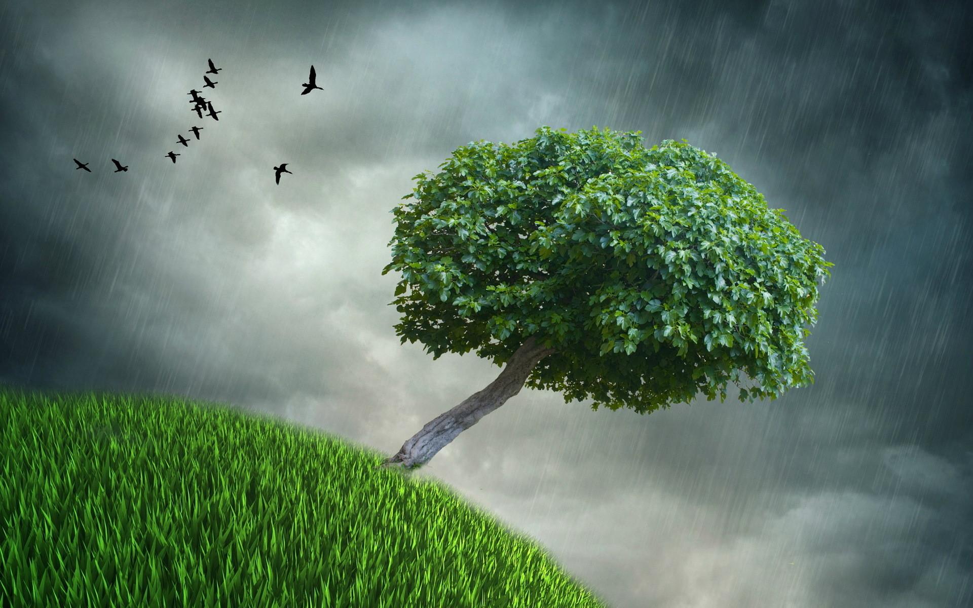 Nature Rain Wallpaper ·① WallpaperTag