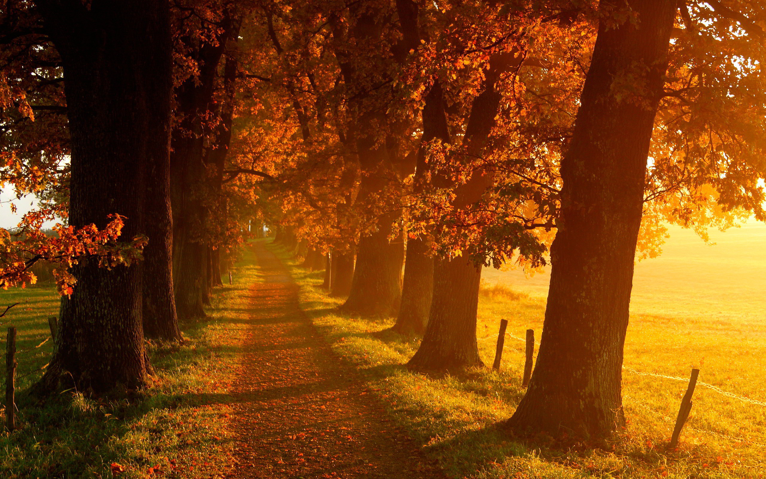 fall scenery backgrounds 183��