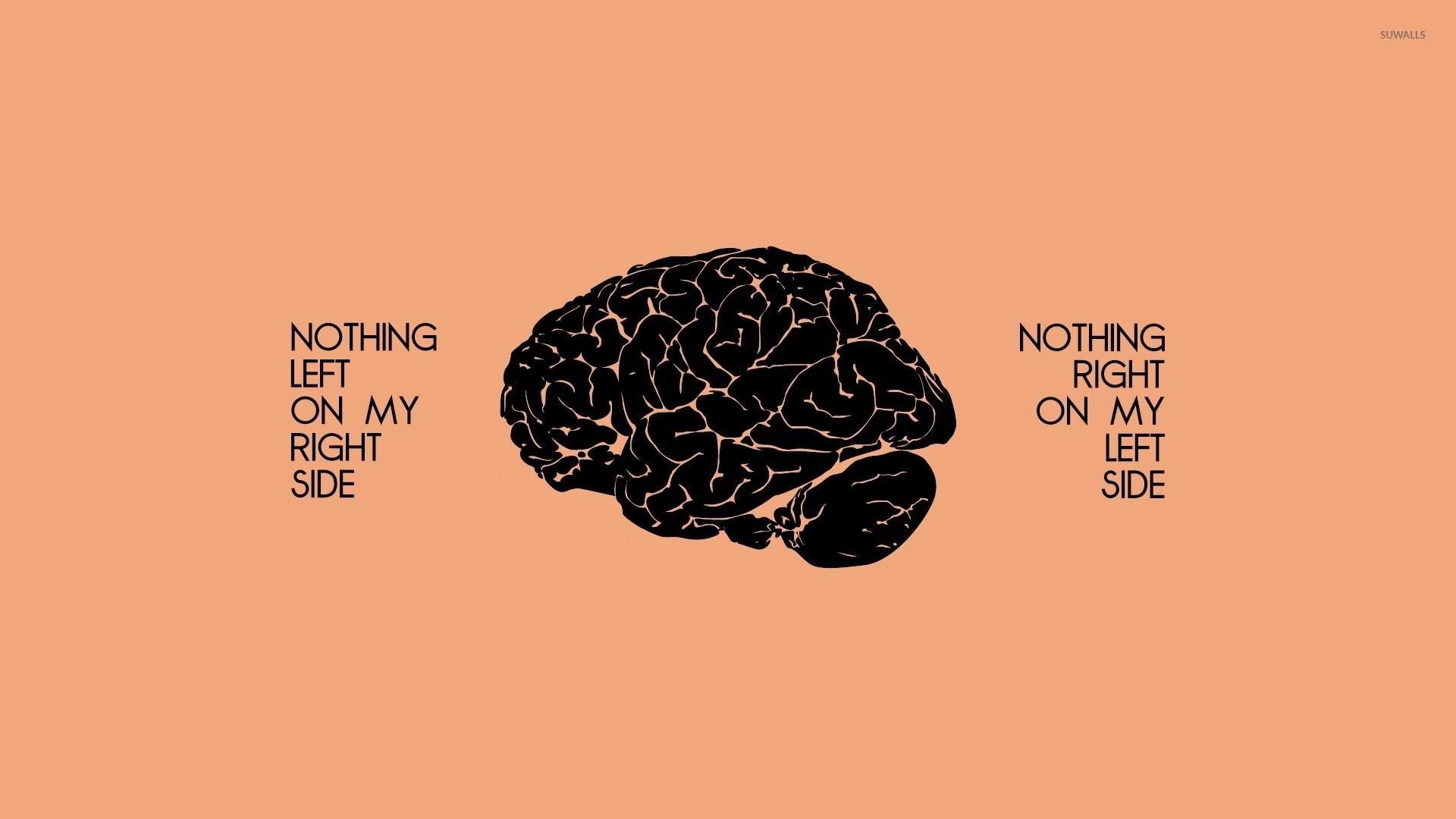 brain anatomy wallpaper 183��