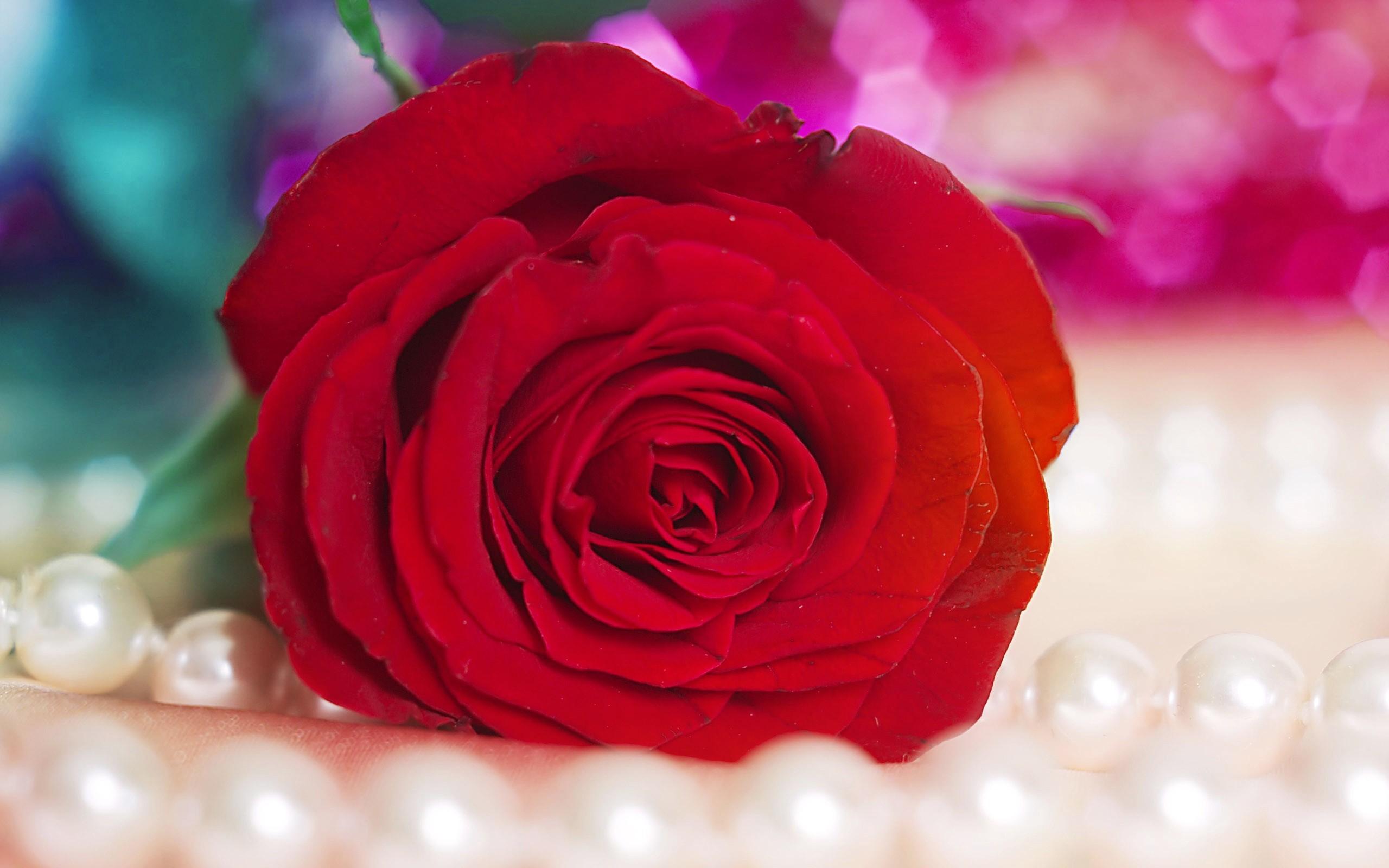 Red Rose Wallpaper Wallpapertag