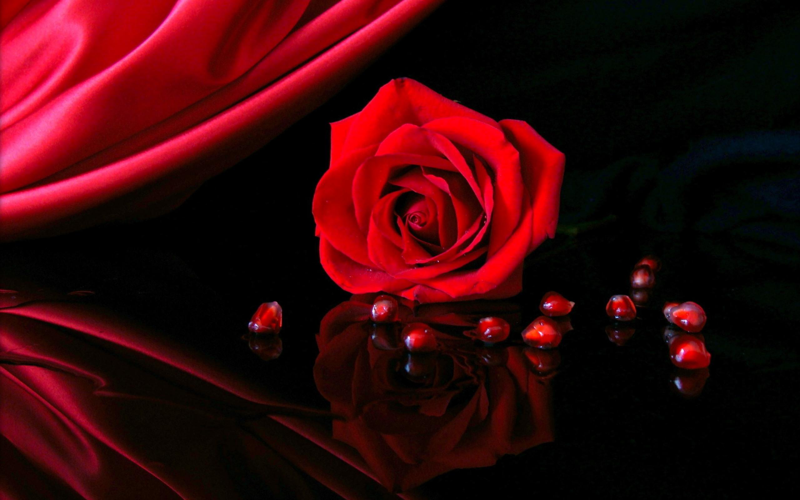 Red Roses Wallpaper ·① WallpaperTag