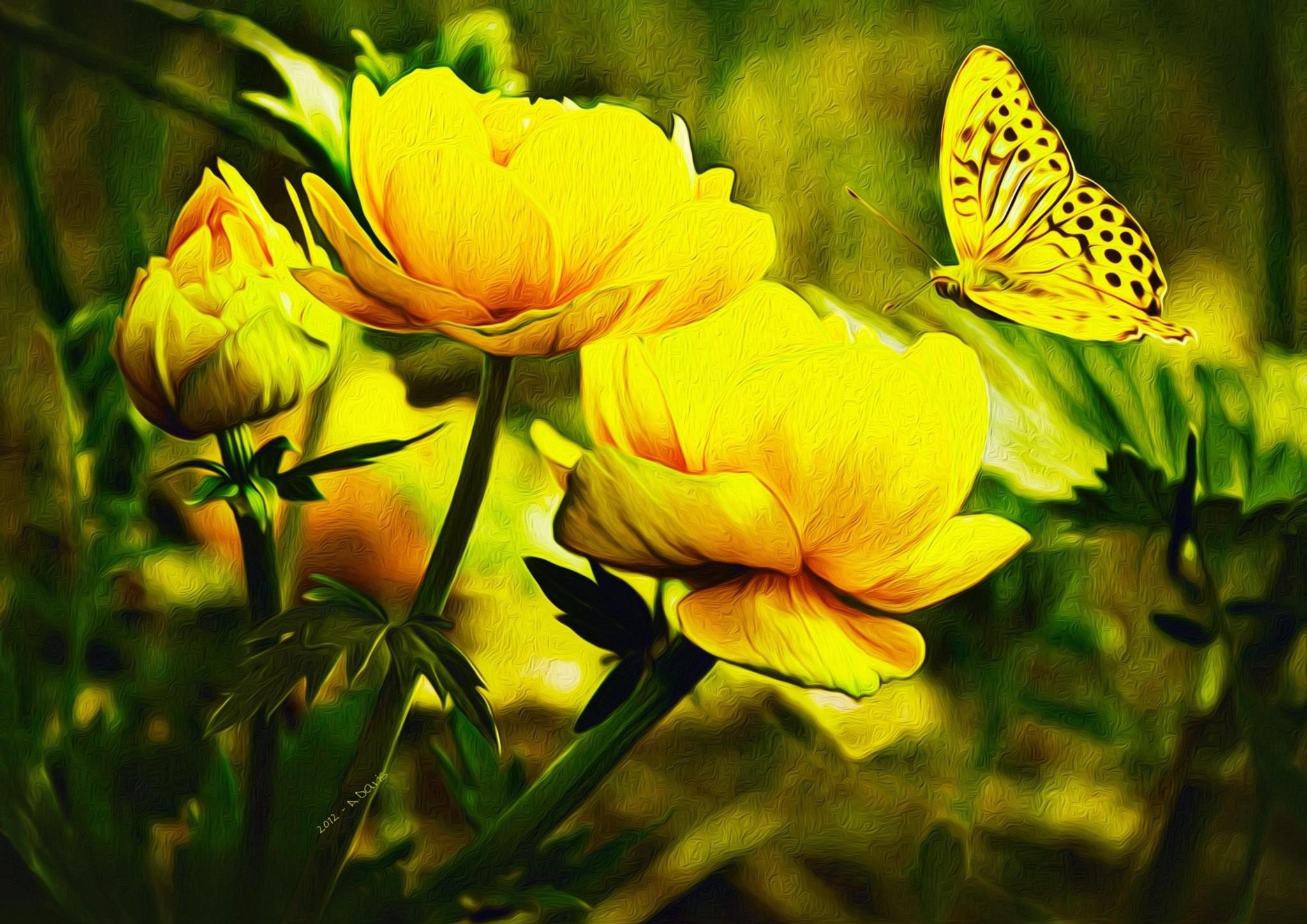Butterfly Desktop Backgrounds ·① WallpaperTag
