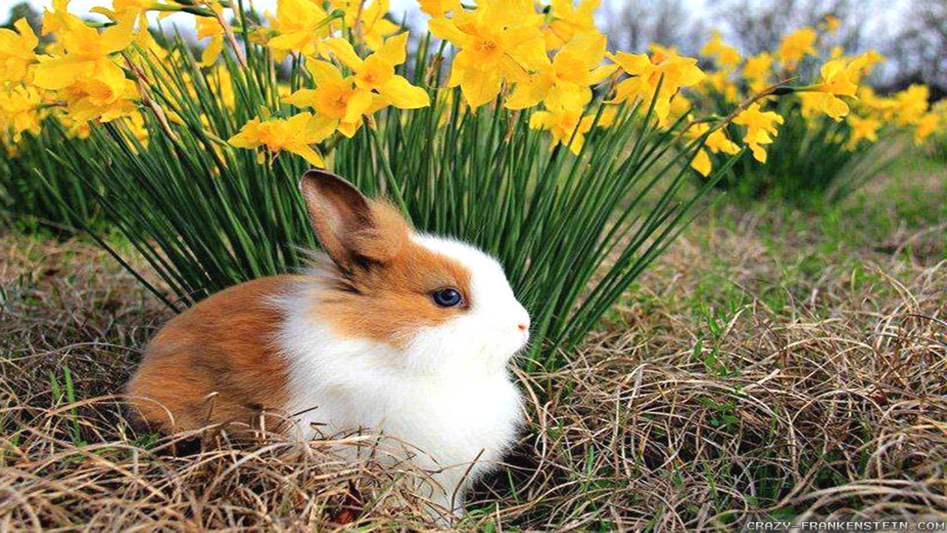 Spring animals desktop wallpaper wallpapertag - Animal 1920x1080 ...