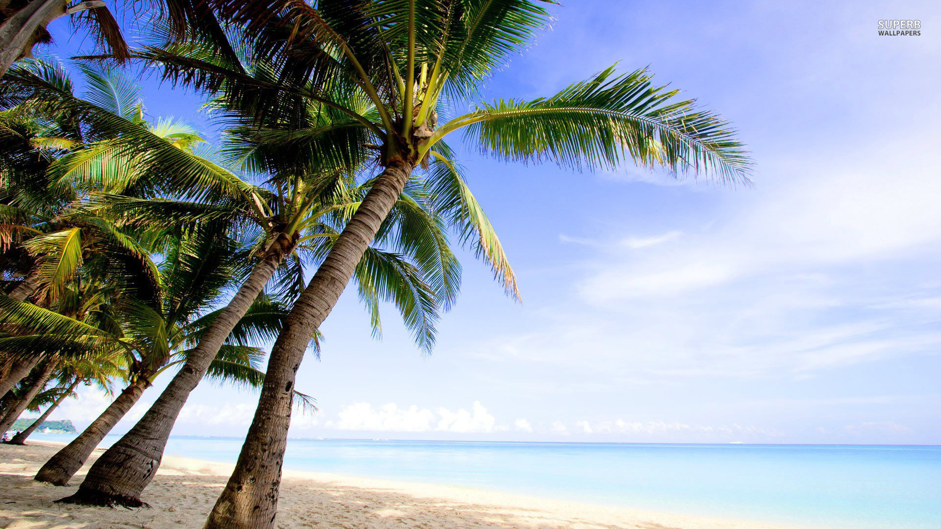 Palm Trees On The Beach: Palm Tree Beach Wallpaper ·① WallpaperTag