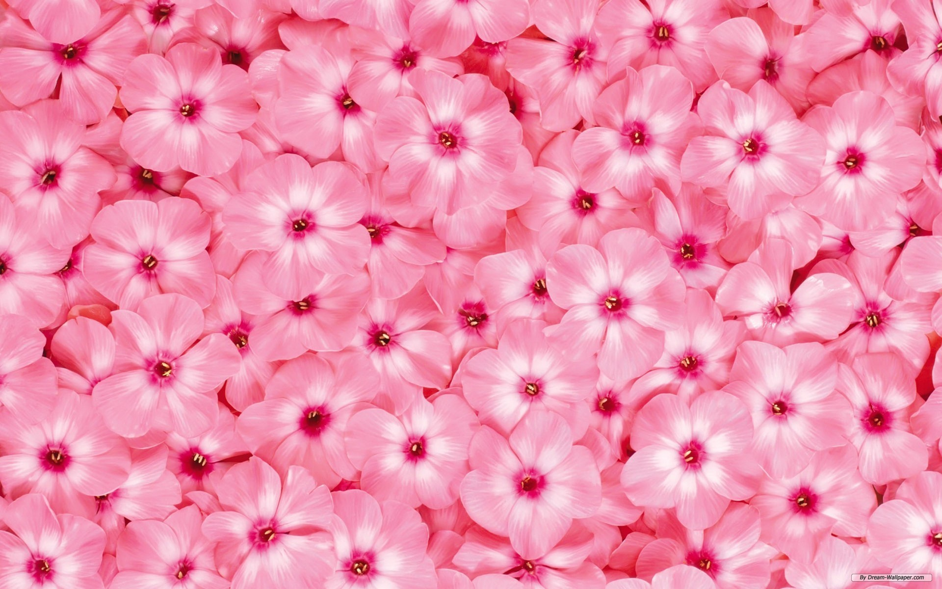 Pretty flower background wallpaper flower beautiful flowers wallpapers wallpapersafari download 9 mightylinksfo