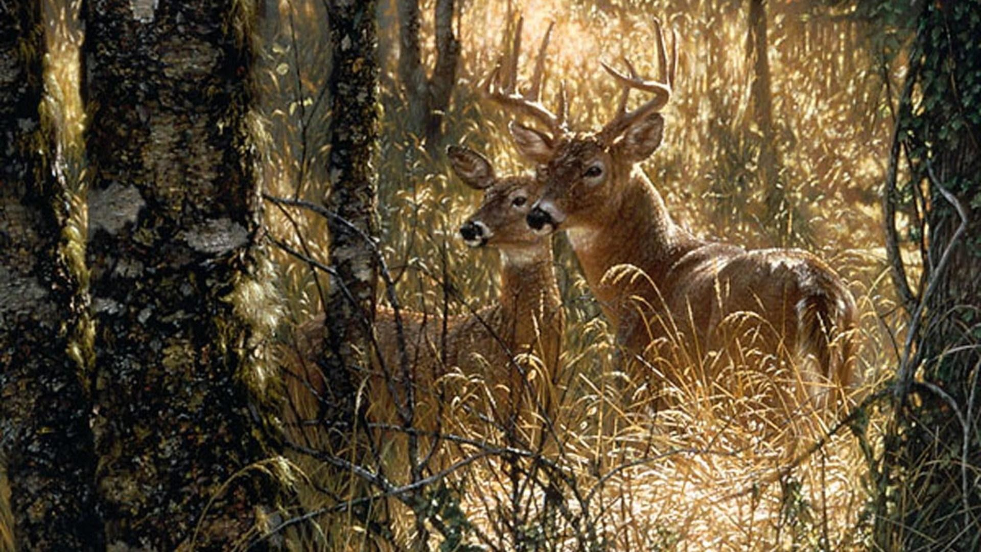 Whitetail Deer Backgrounds 183 ①