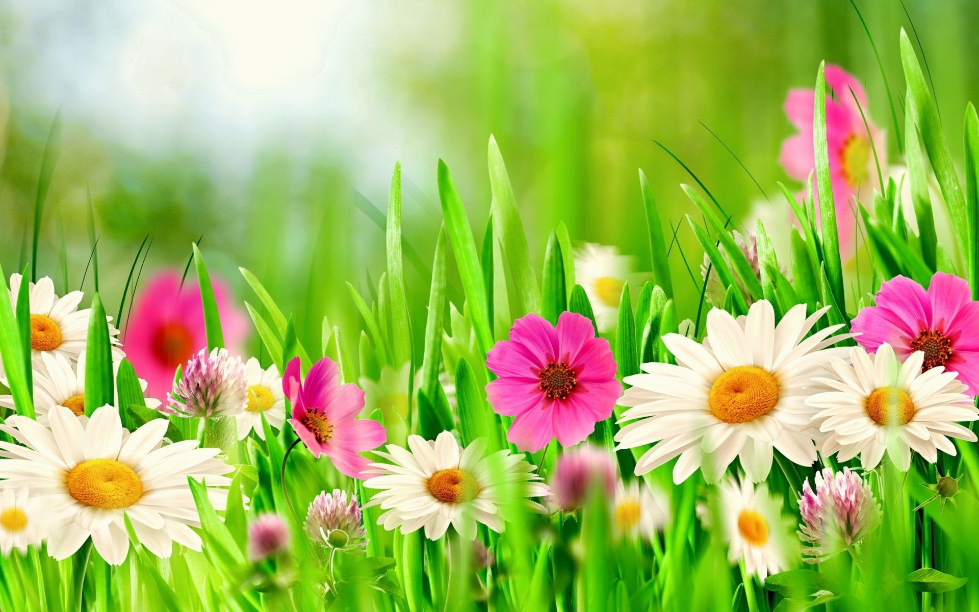 Desktop Wallpaper Spring Flowers