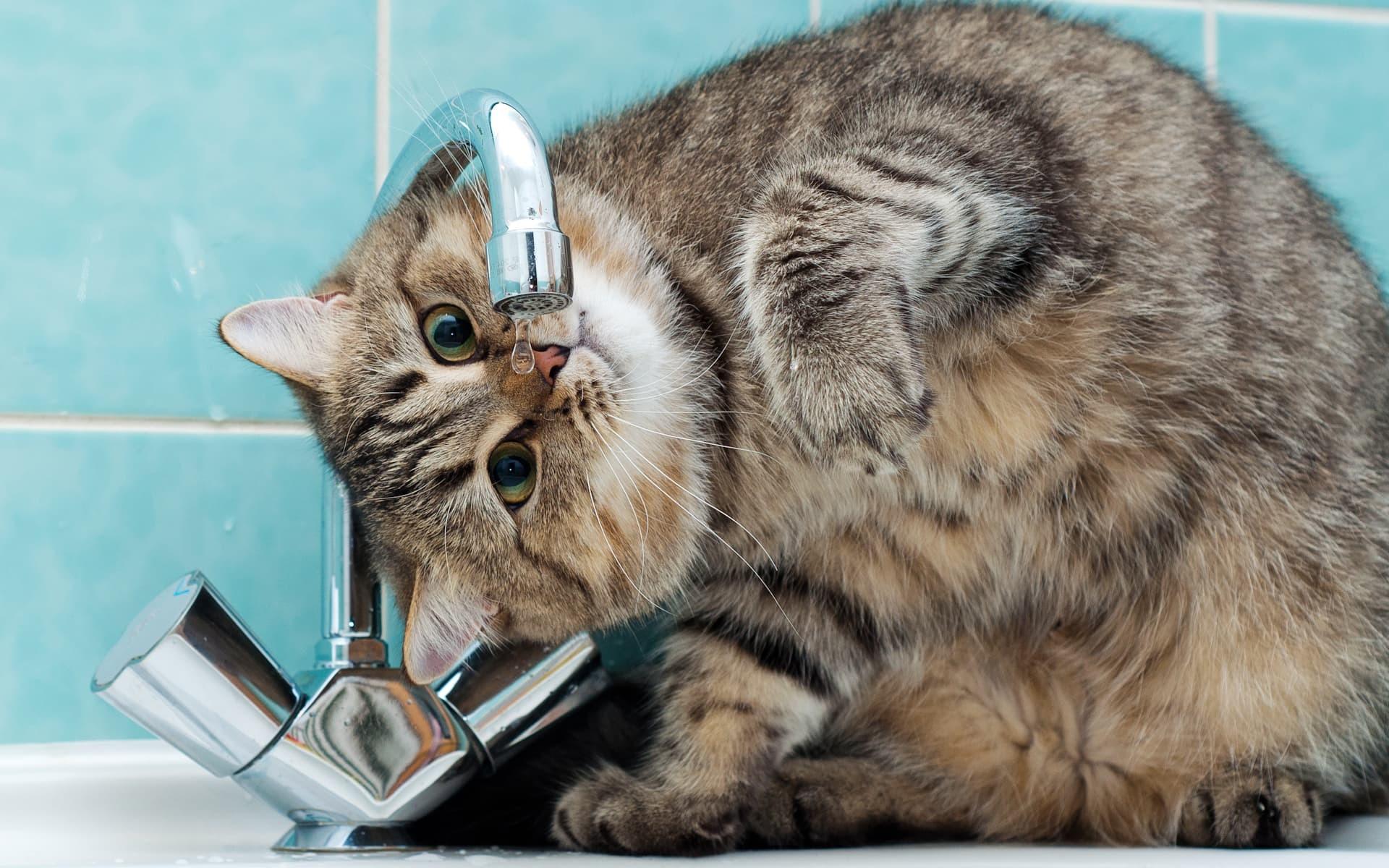 Funny Cats: Funny Cats Wallpapers ·① WallpaperTag