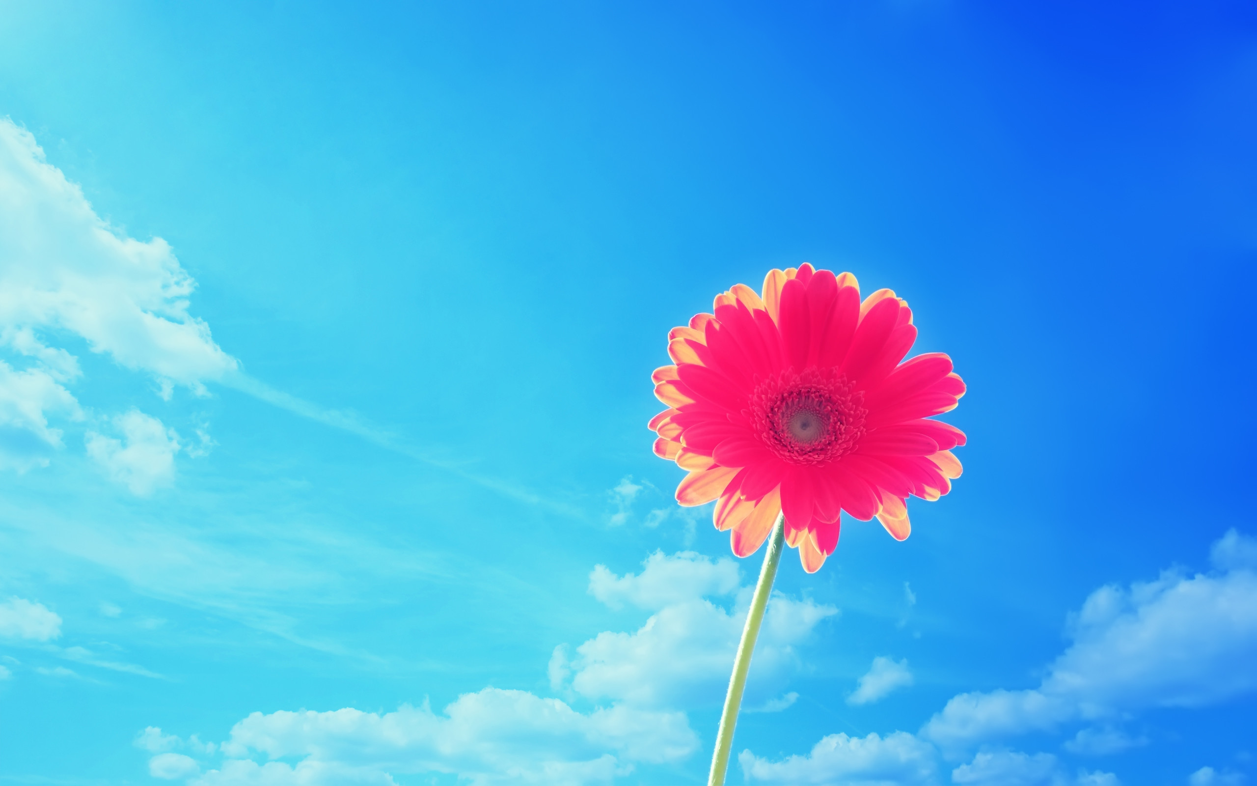 Flower Desktop Backgrounds ·① WallpaperTag