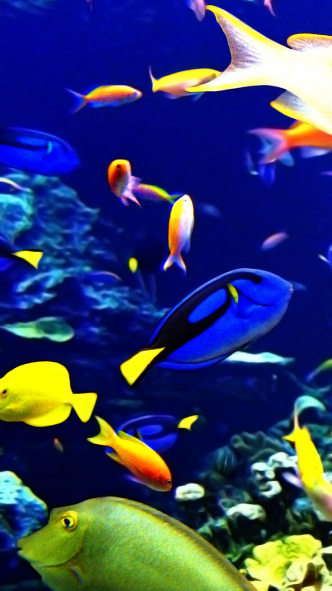 Tropical Fish Backgrounds ·①