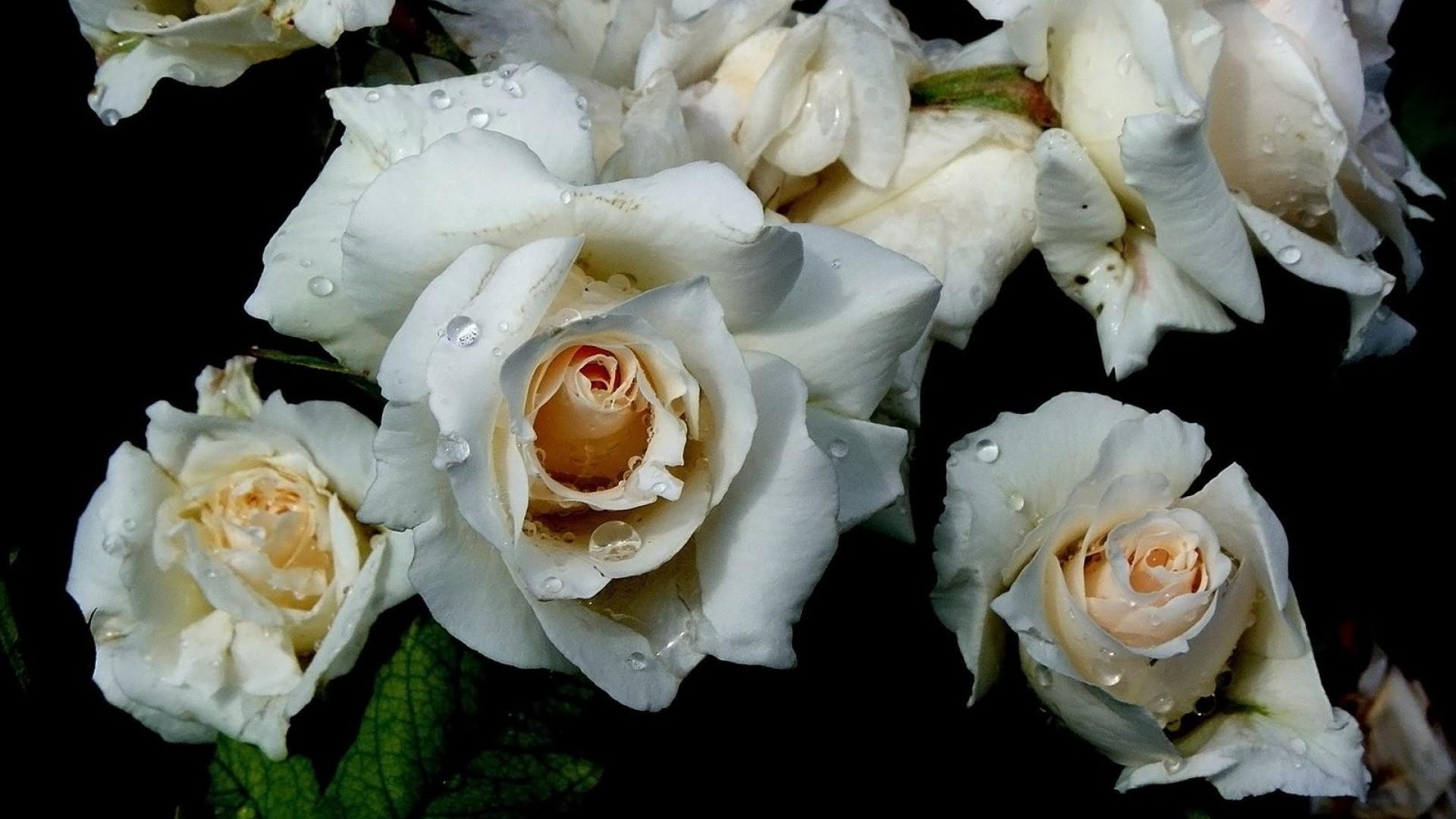 white flower wallpaper 1920x1080 - photo #17