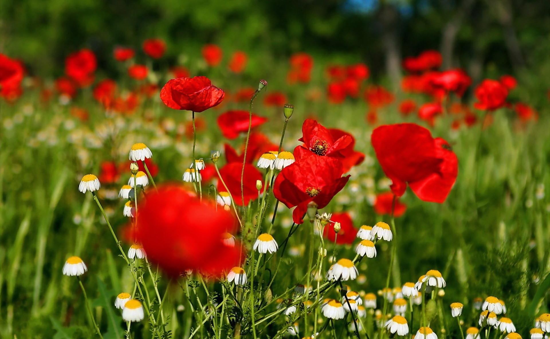 Flowers Images Desktop Backgrounds 1