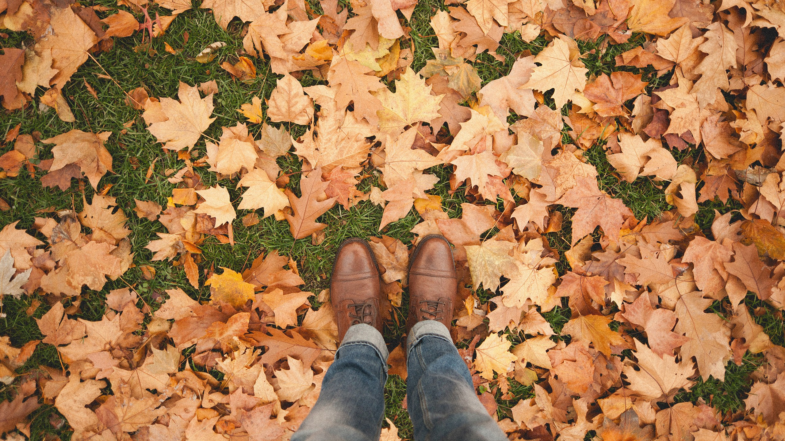 71 fall backgrounds tumblr 183�� download free cool hd