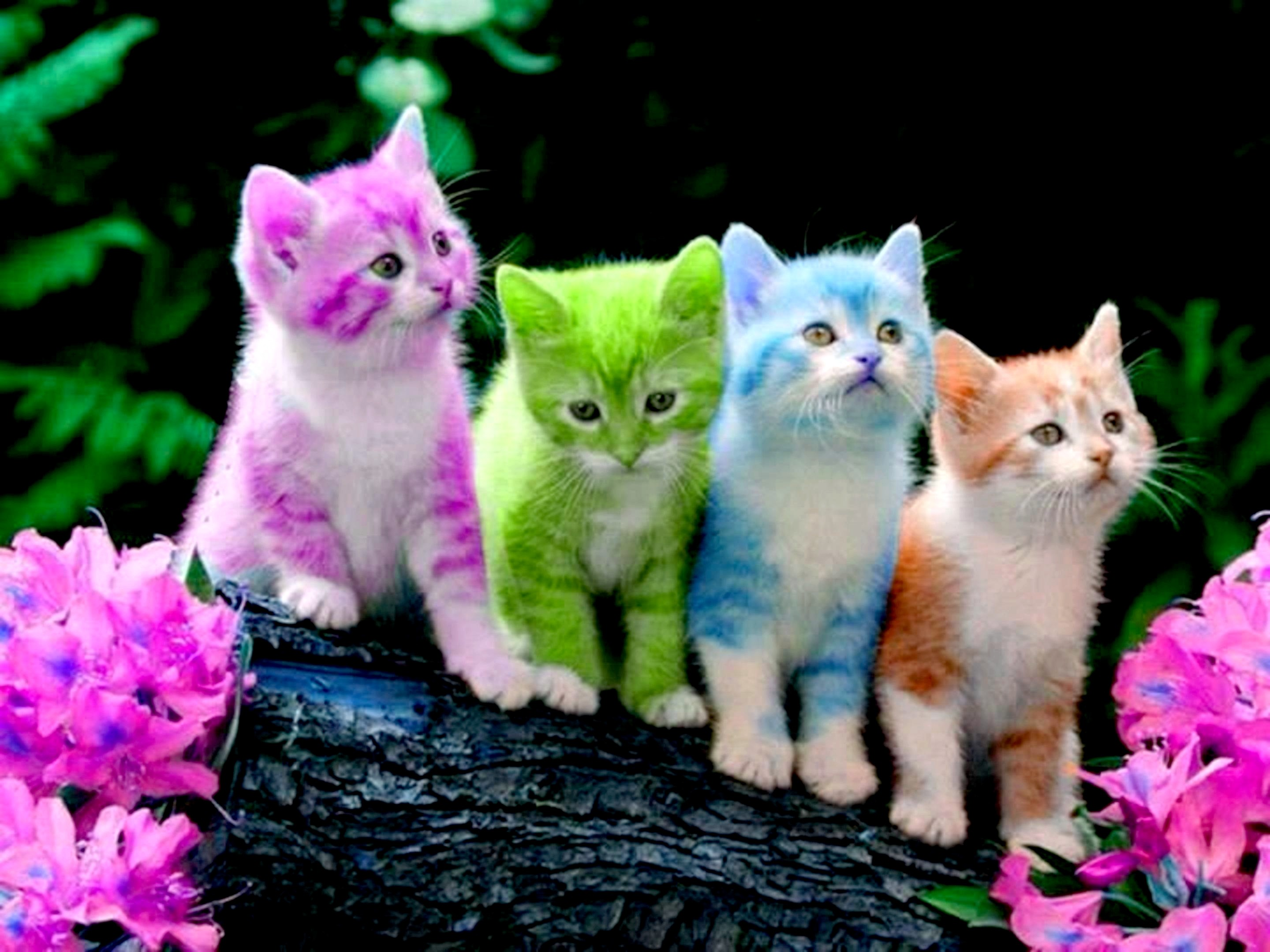 2880x2160 Free Cute Kitten Wallpapers Wallpaper Download Animals