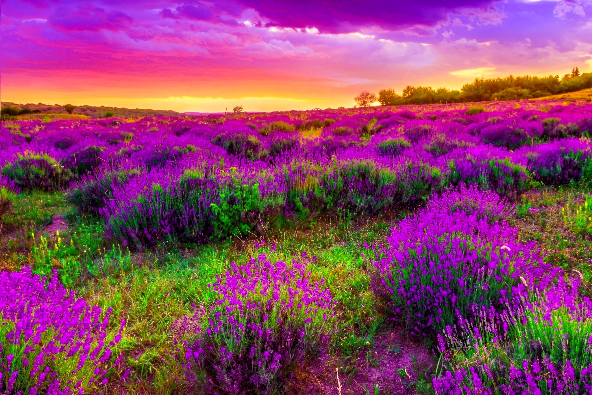 spring background 183�� download free beautiful hd