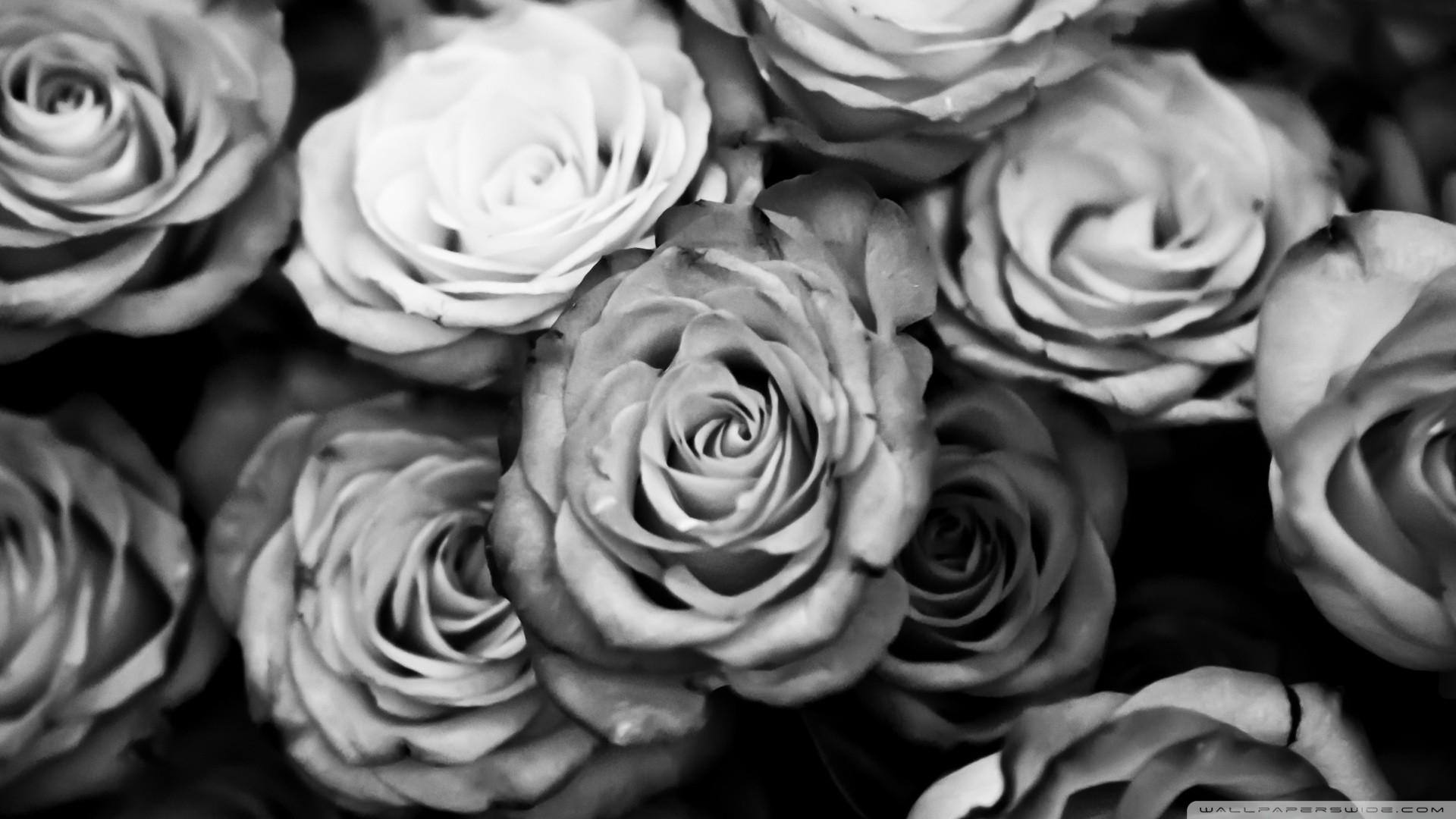 Black And White Rose Wallpaper Wallpapertag
