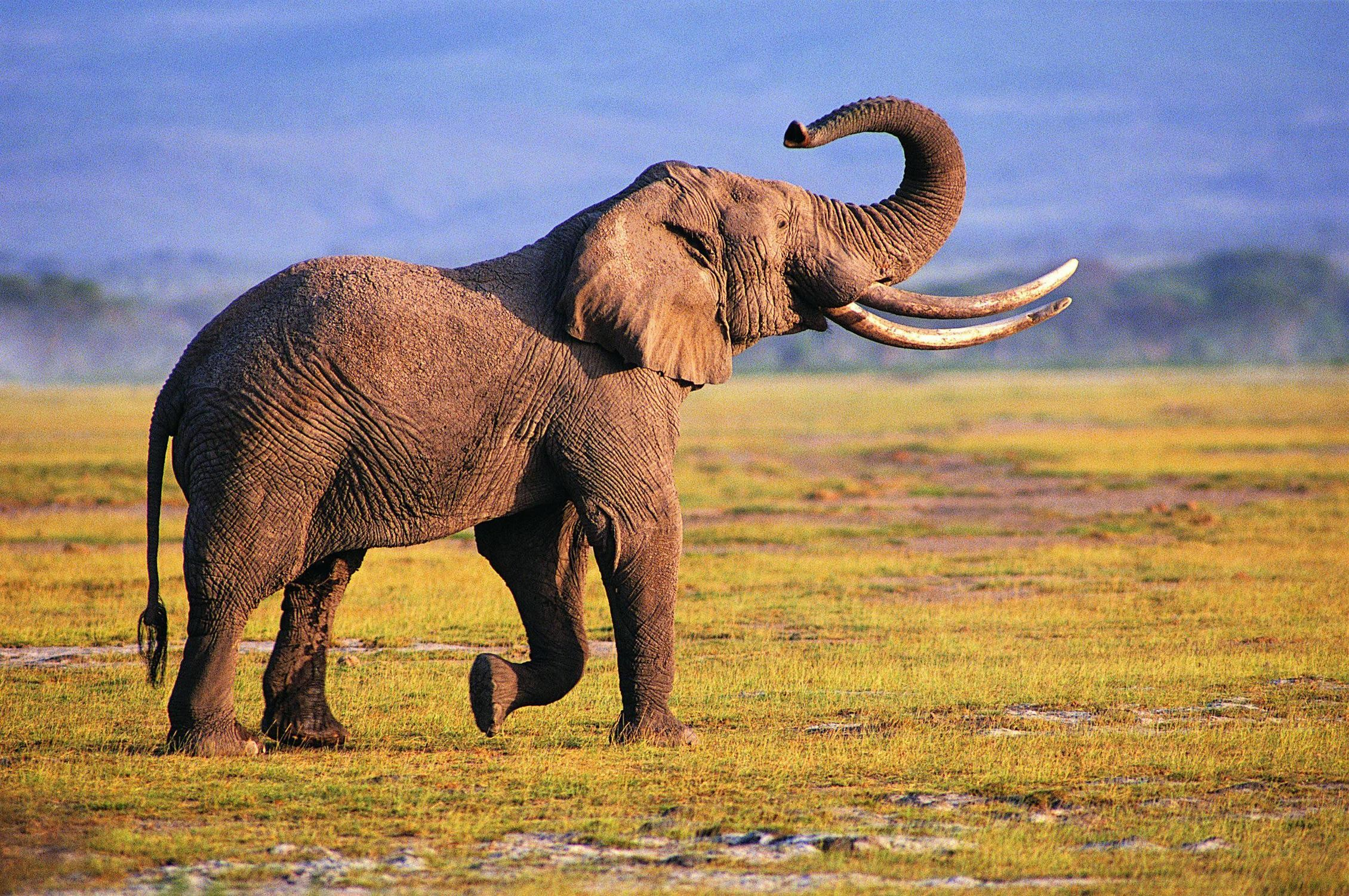 Elephant Wallpaper Download Free Cool Full Hd Wallpapers For
