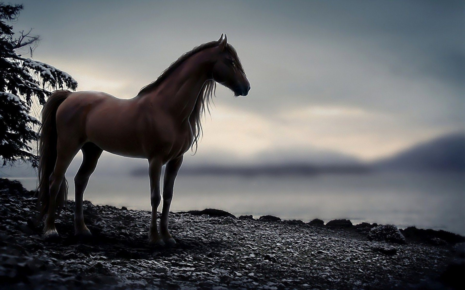 60+ Horse Backgrounds ·① Download Free Stunning High