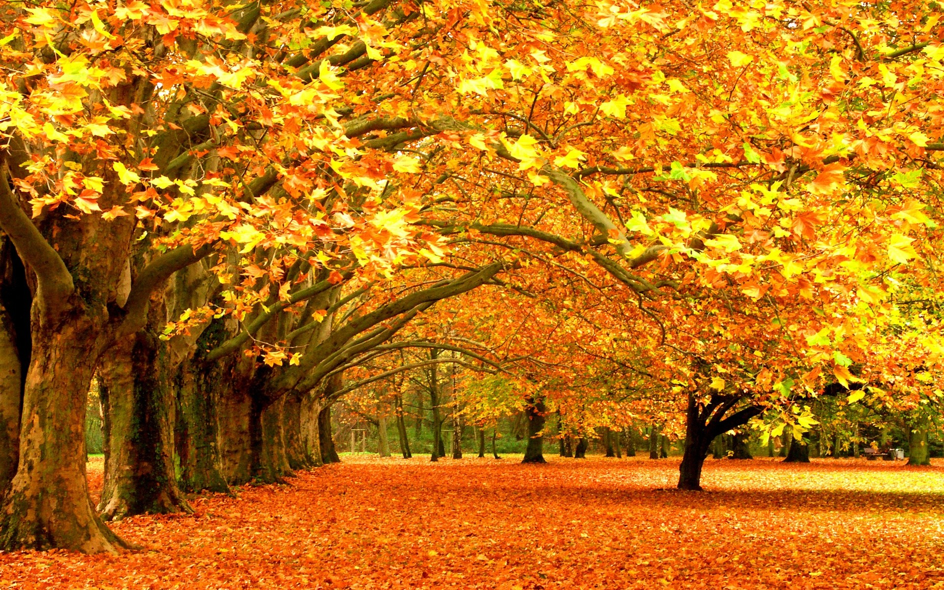 Free Desktop Wallpaper Autumn Leaves: Fall Desktop Wallpaper ·① Download Free Awesome High