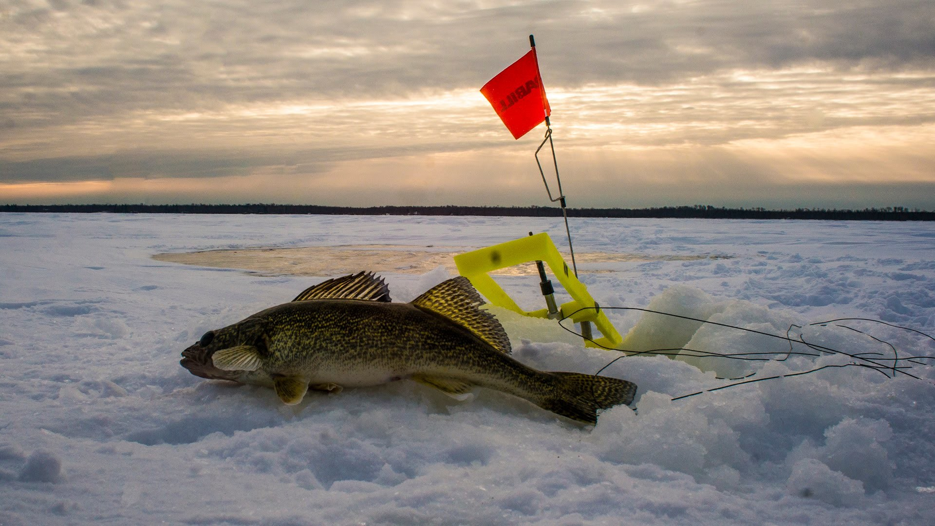 Walleye wallpaper for Ice fishing guides minnesota