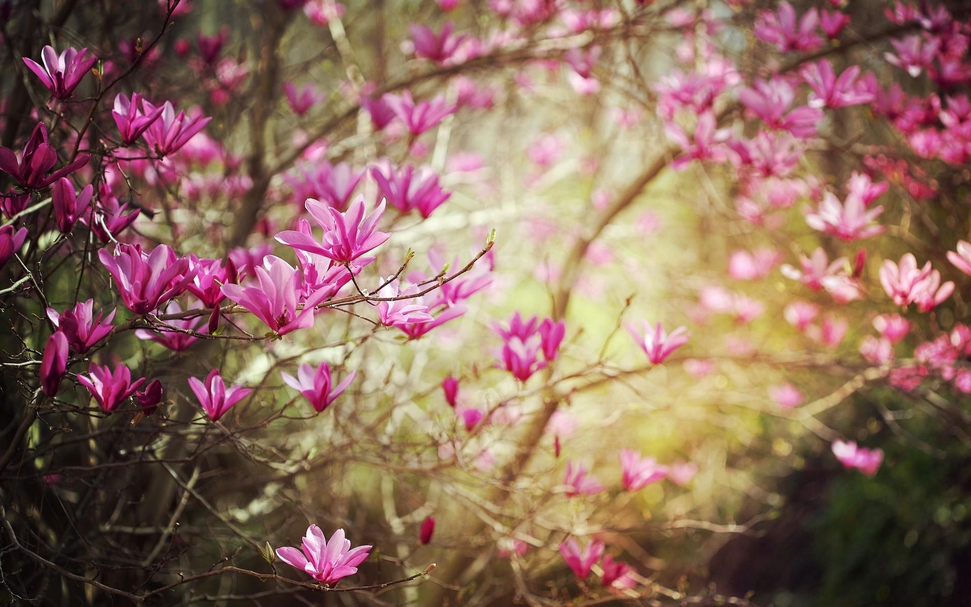 spring blooming flowers desktop backgrounds - flowers healthy