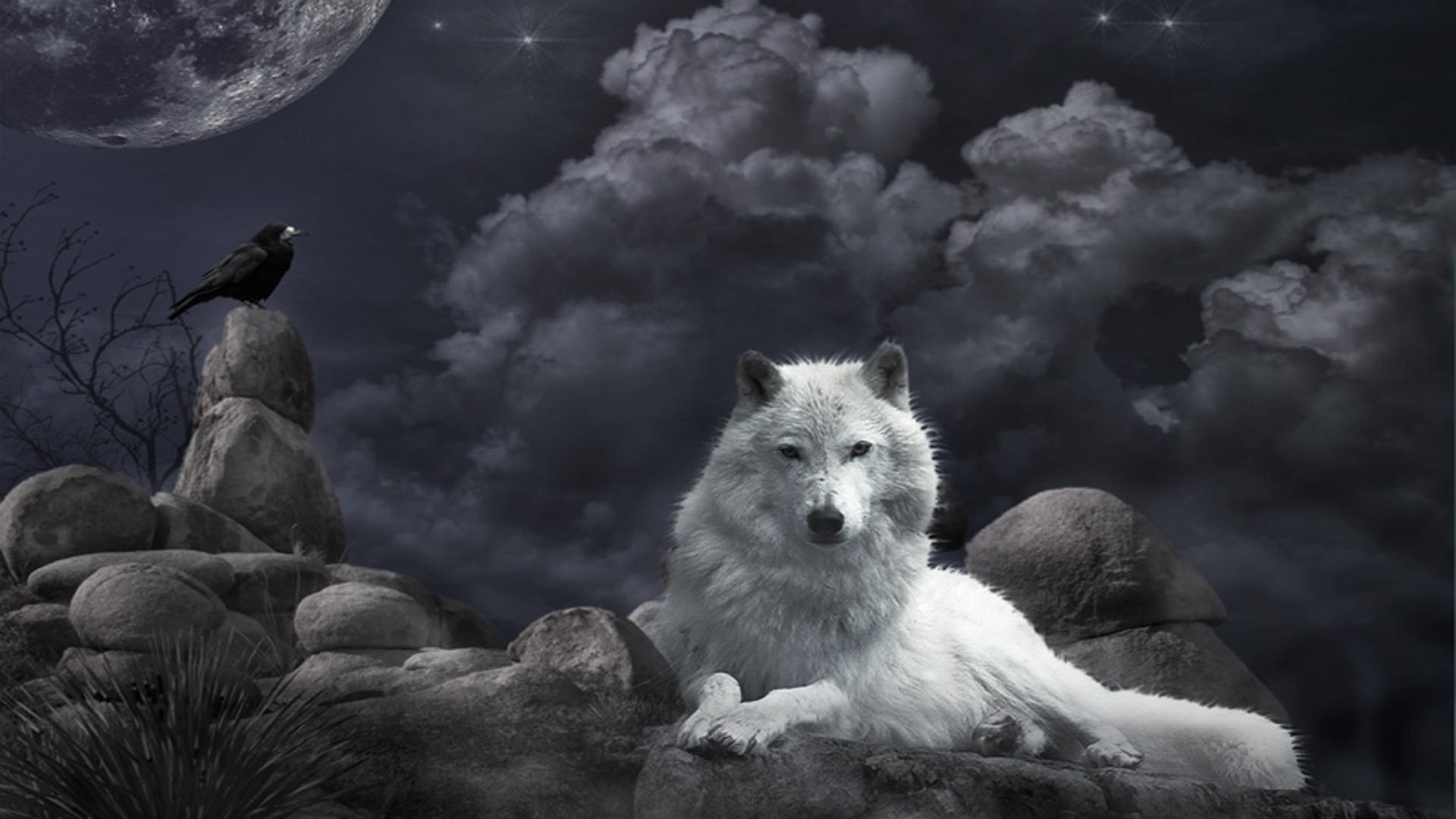 Lone Wolf Wallpaper ·①