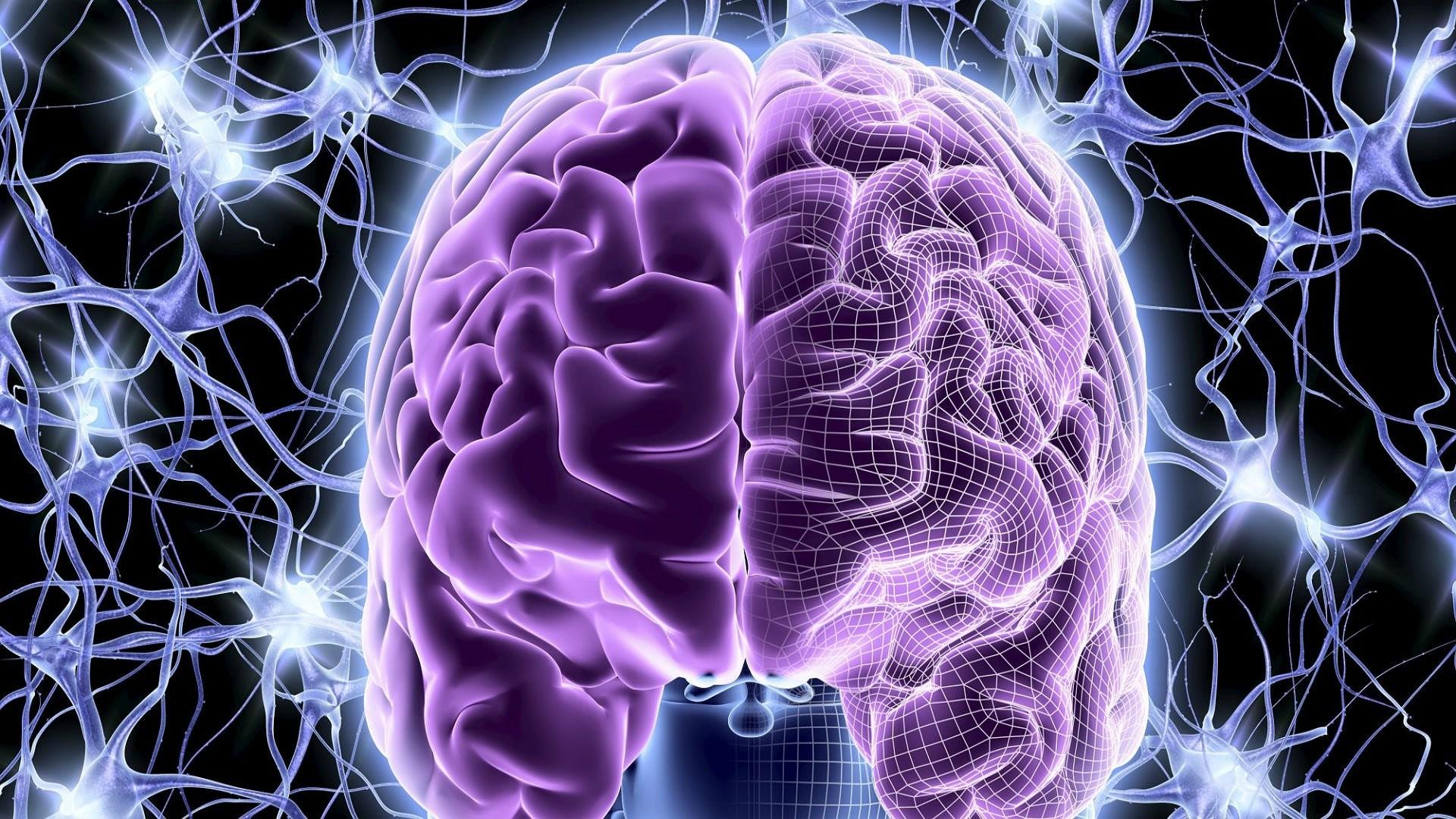 Brain Anatomy Wallpaper ·①