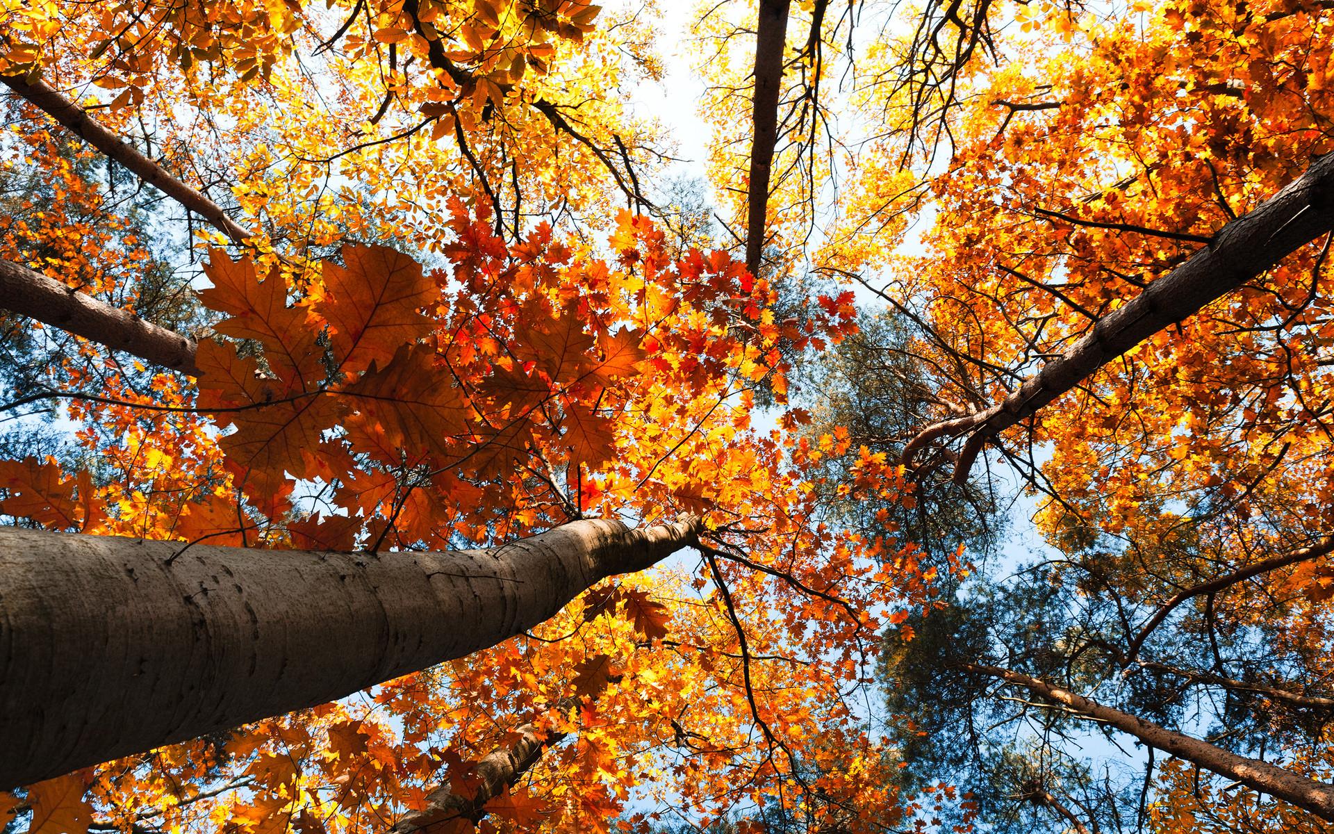Wonderful Wallpaper Mac Autumn - 817661-popular-fall-tree-wallpaper-1920x1200  Best Photo Reference_428236.jpg
