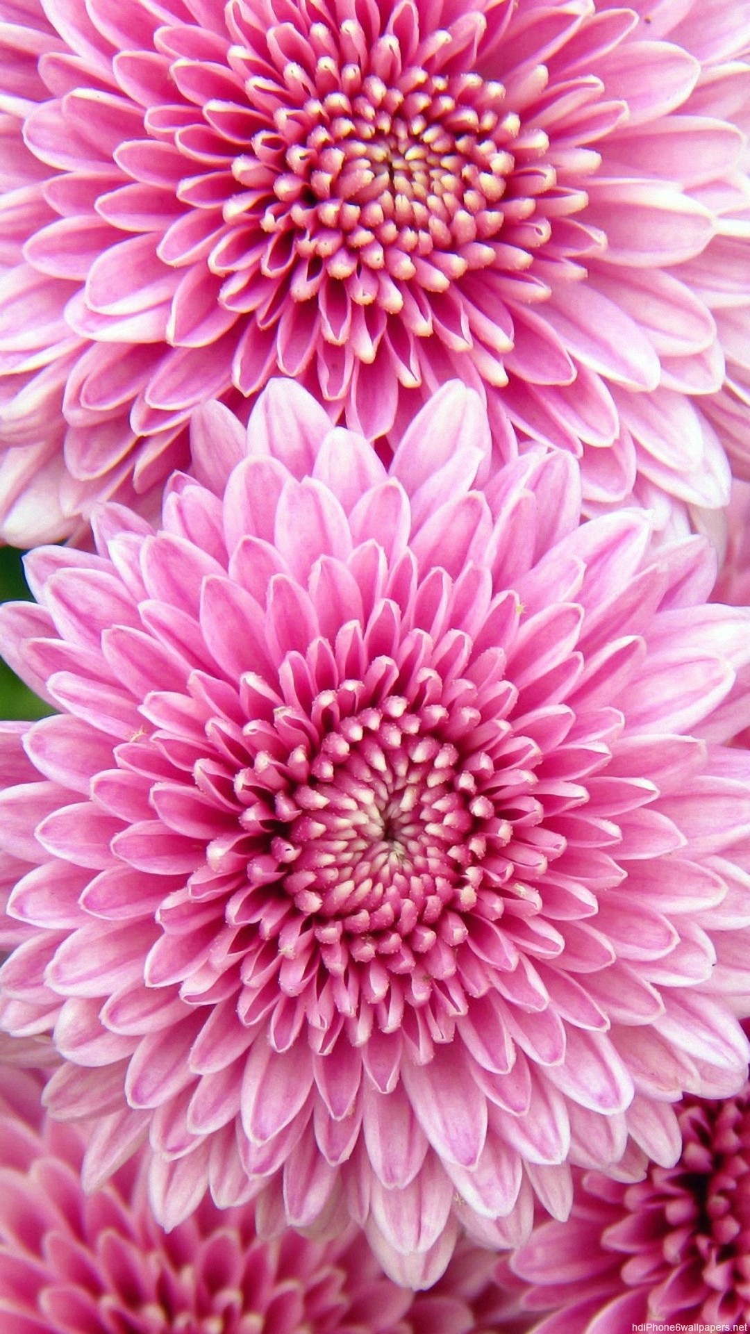 Pretty flower background wallpapertag - Pink flower wallpaper background ...