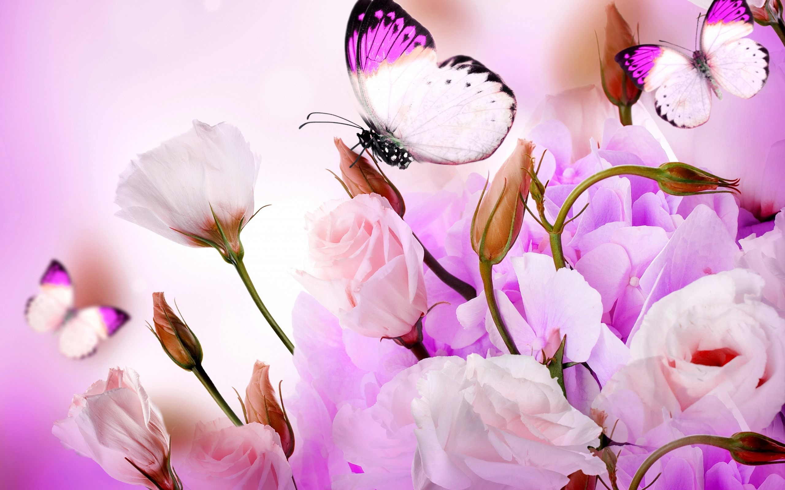 Butterfly And Flower Wallpaper Wallpapertag