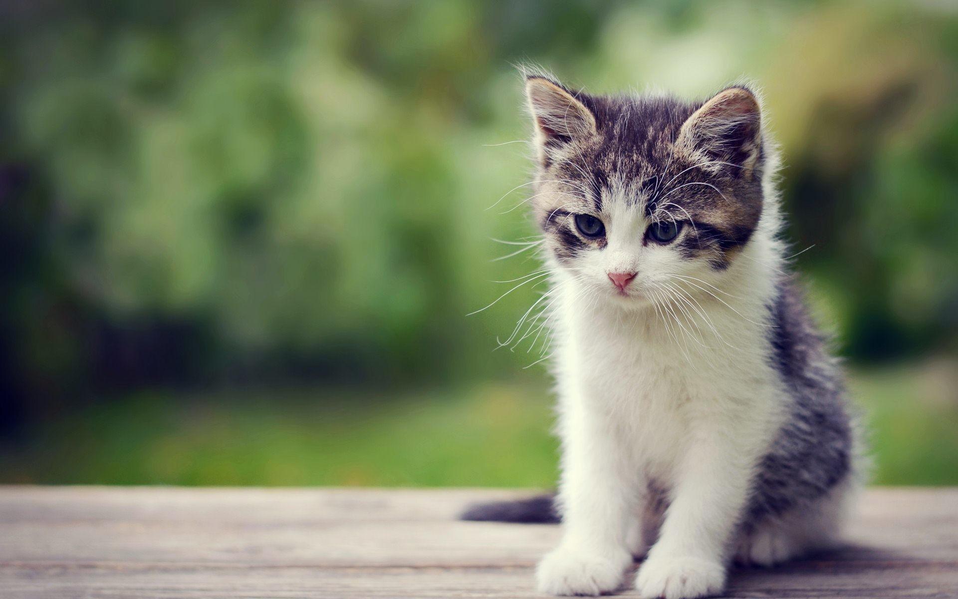 Cute kitten wallpapers wallpapertag - Cute kitten backgrounds for desktop ...