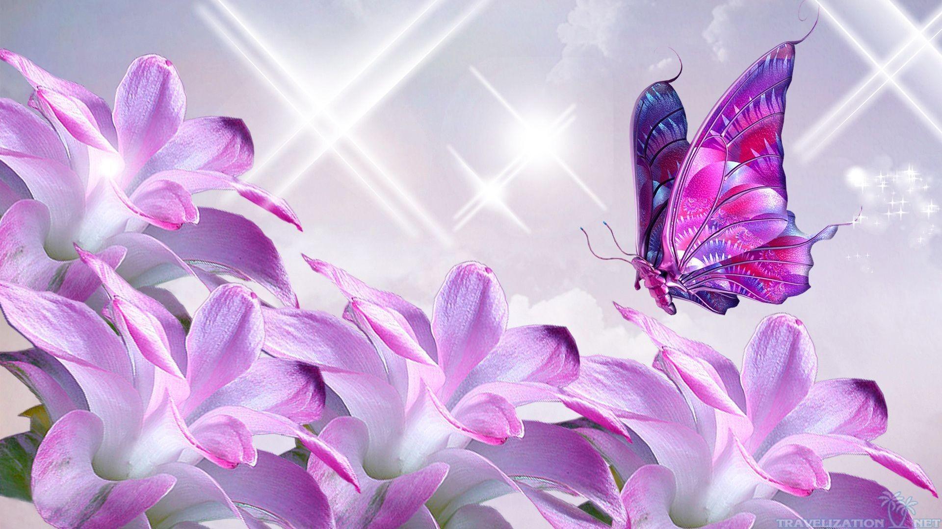 Pretty Butterfly Wallpaper ·① WallpaperTag
