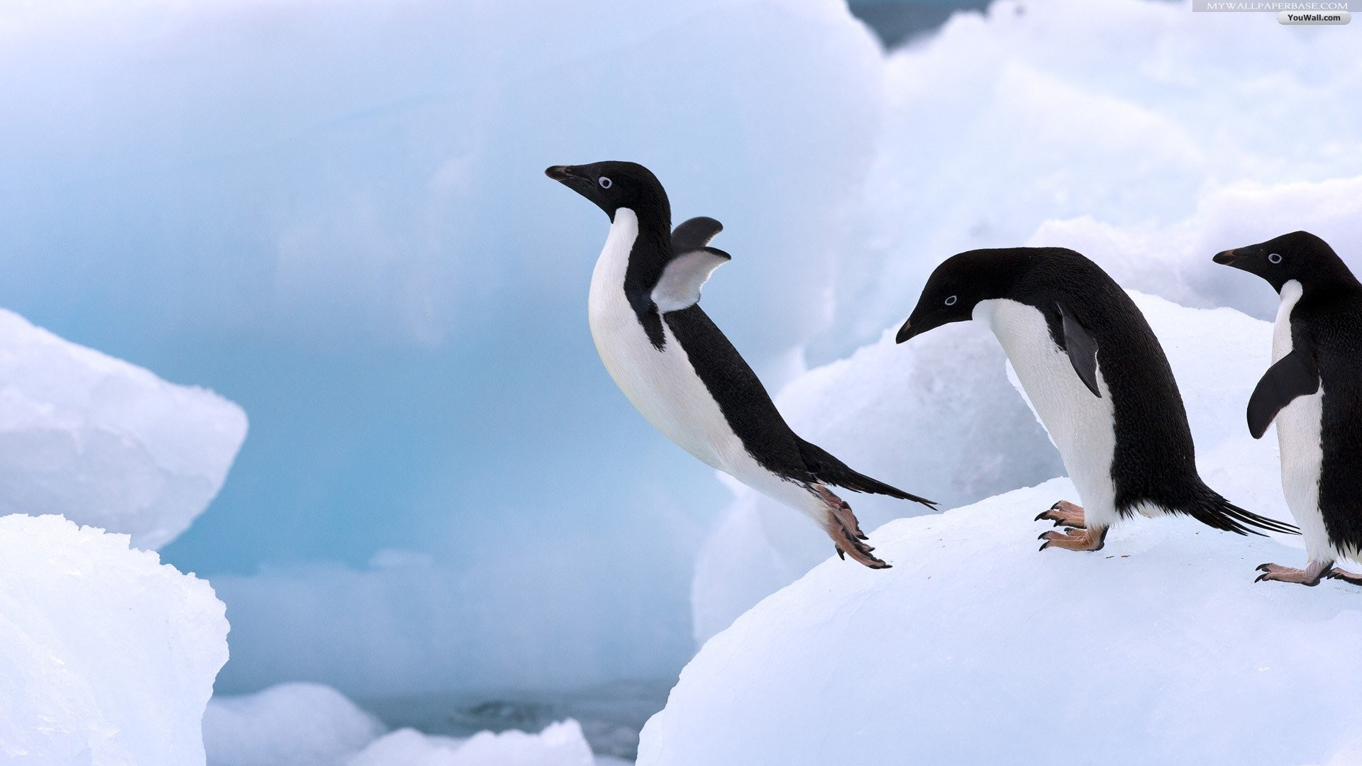 penguin wallpaper ·① download free cool high resolution backgrounds