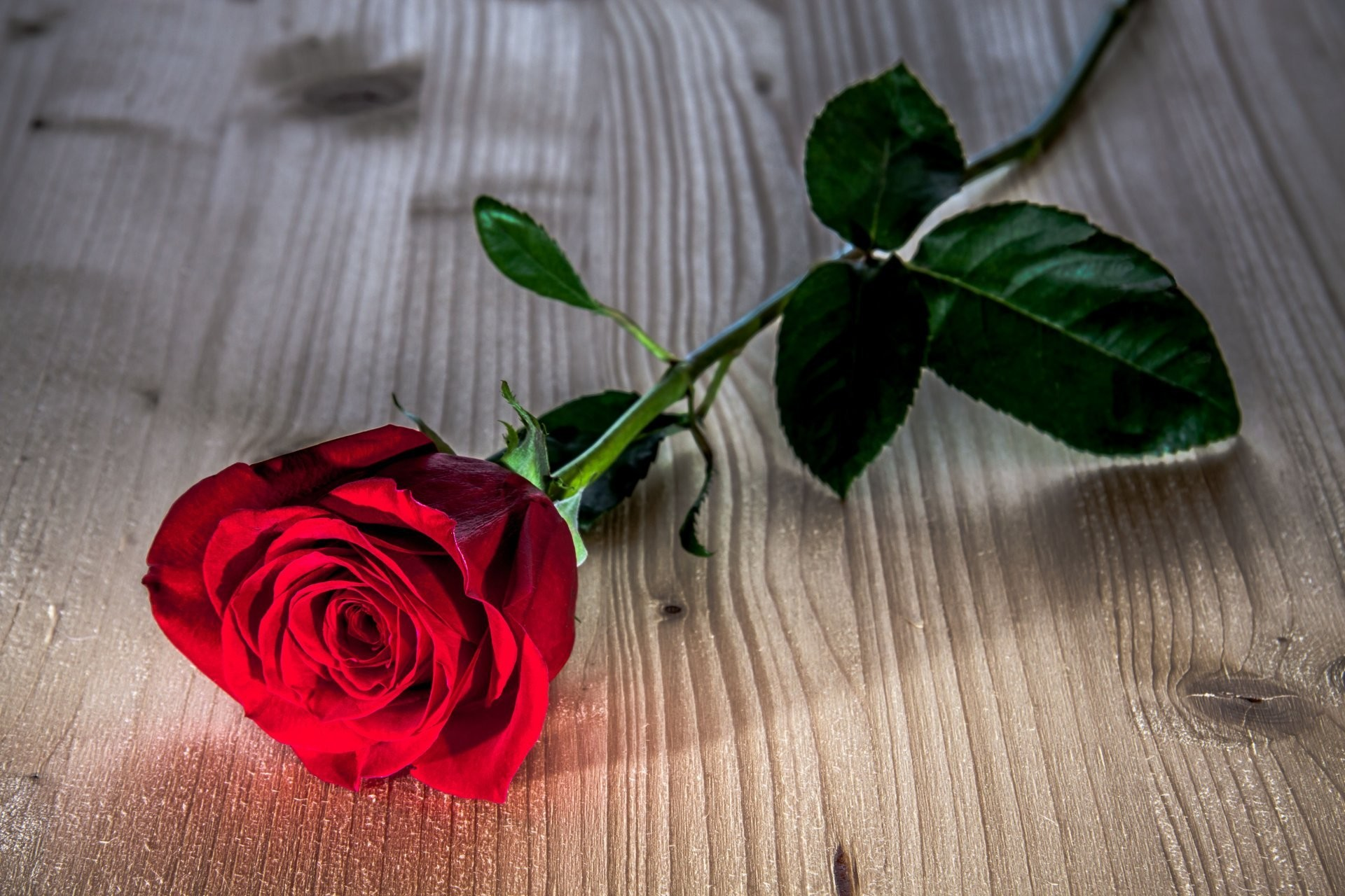 Red Rose Wallpapers Wallpapertag
