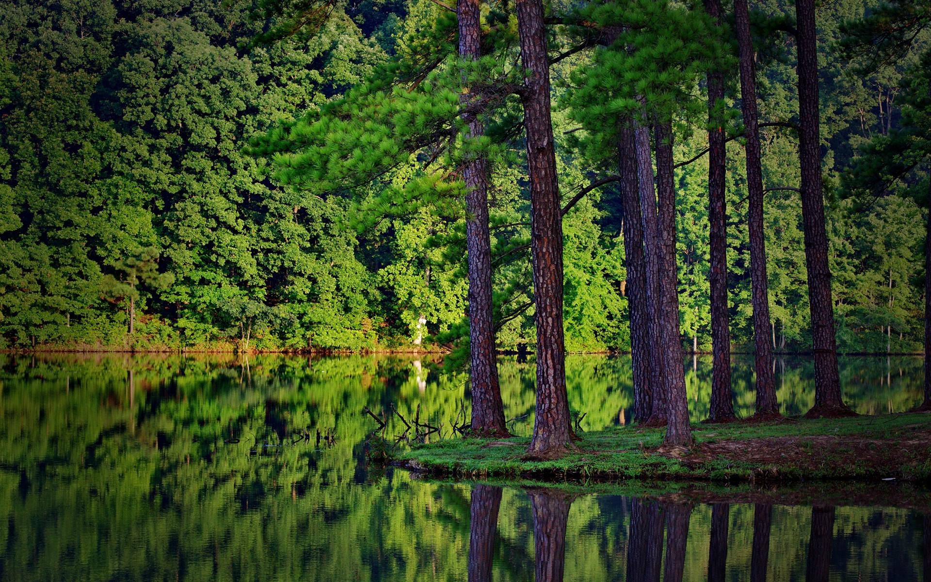 Forest Desktop Background Wallpapertag