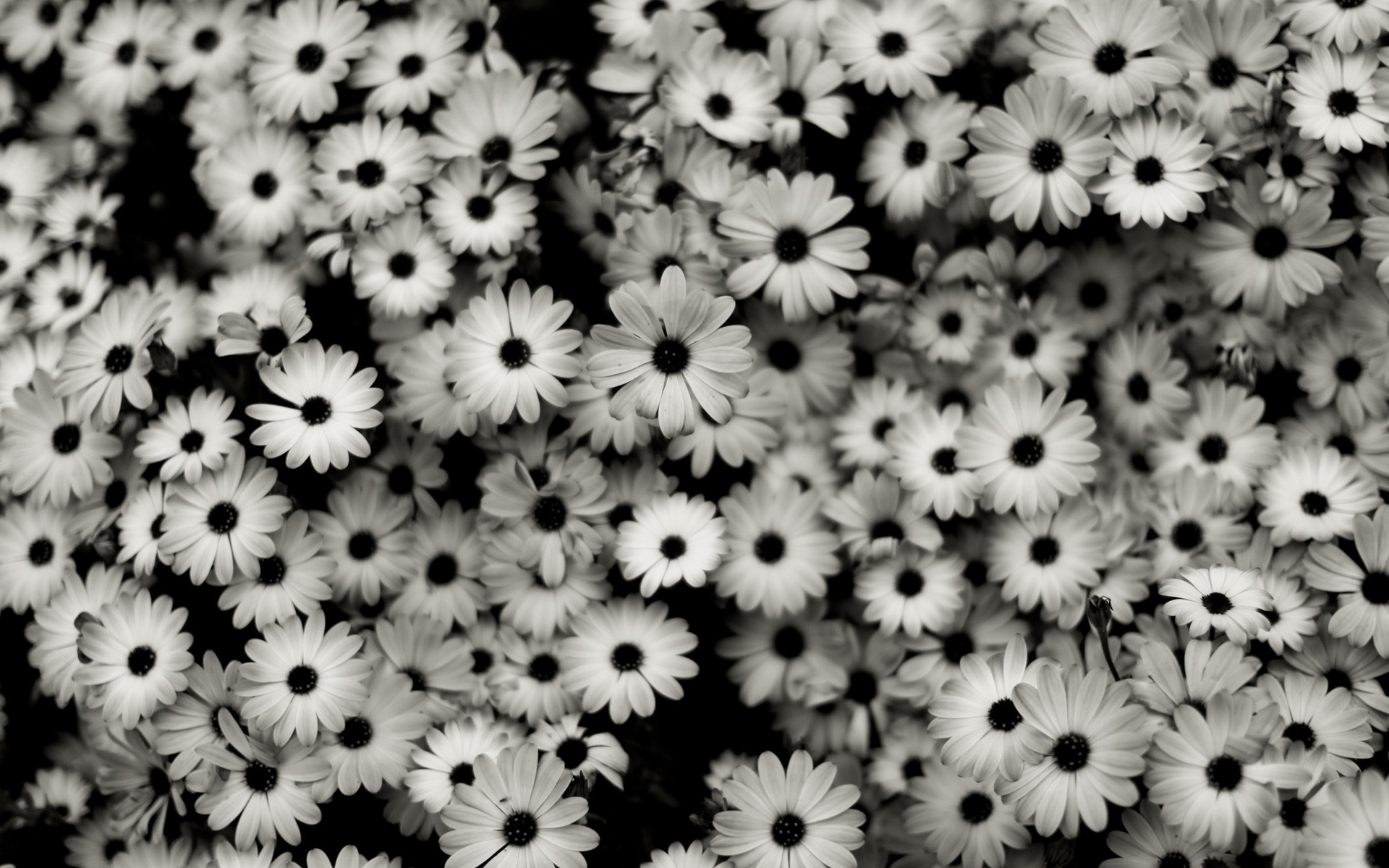 60 Tumblr Backgrounds Black And White Download Free Beautiful