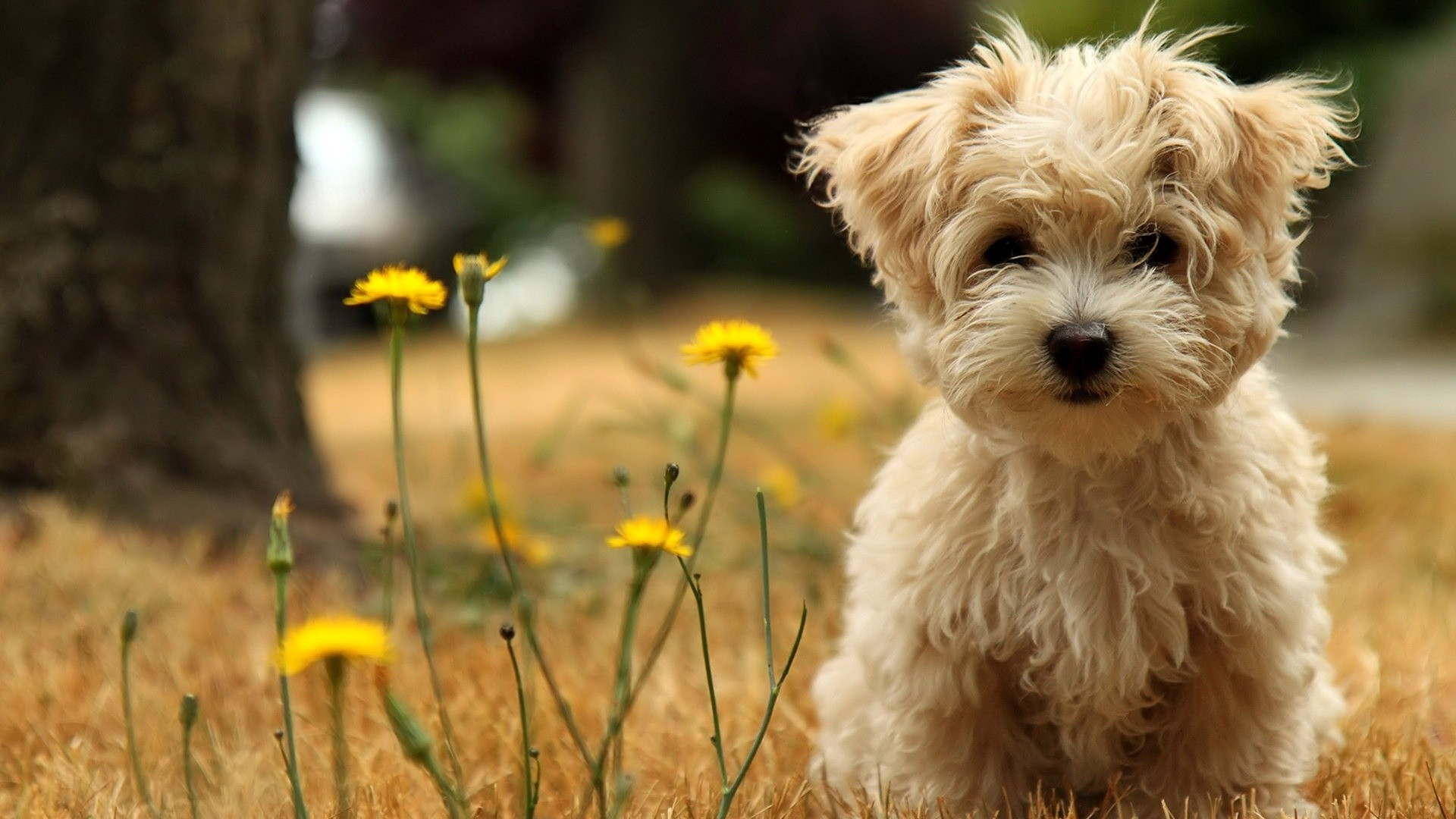 Dog desktop backgrounds hd voltagebd Choice Image