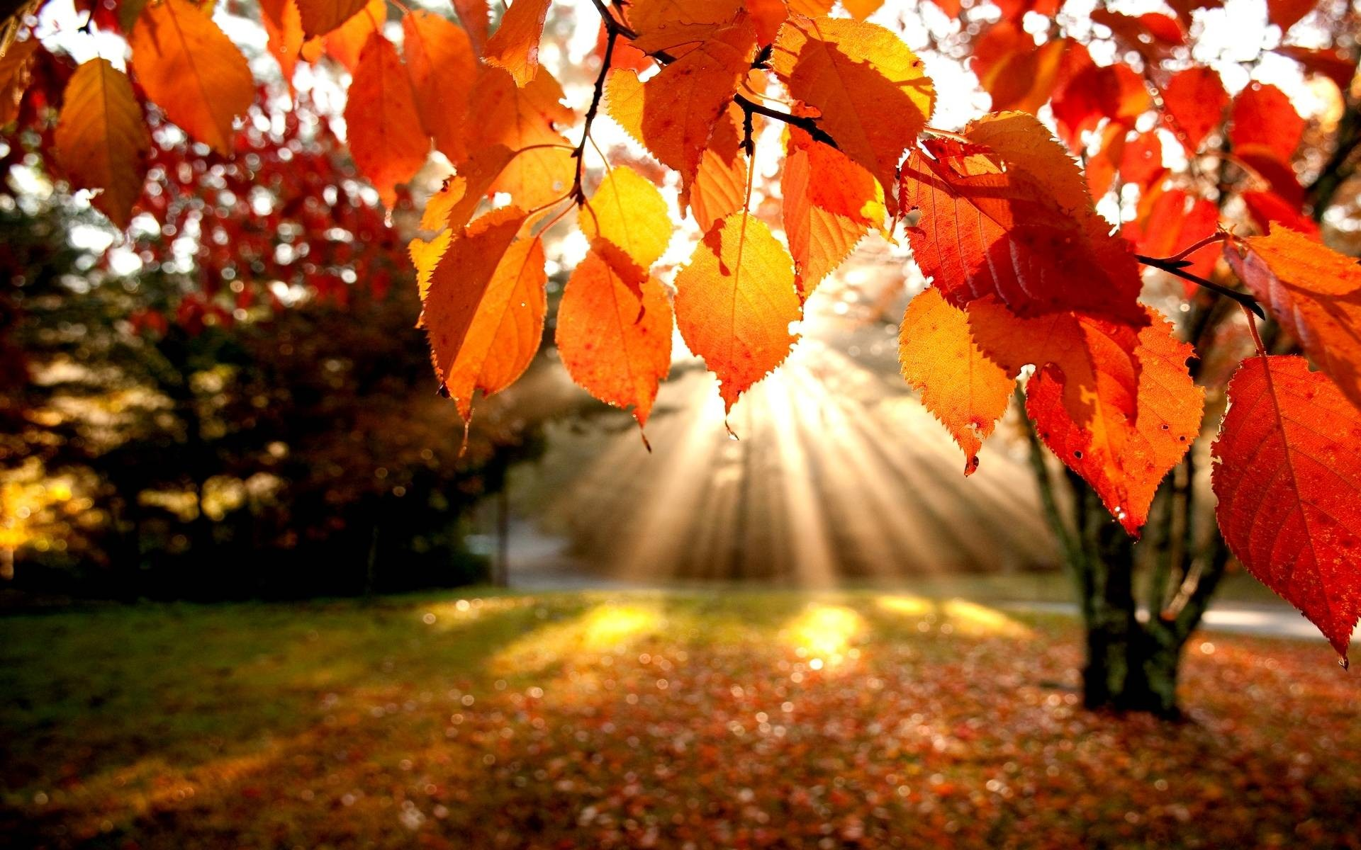 70 fall backgrounds download free cool full hd backgrounds 1920x1200 free download fall backgrounds 1920x1200 for android tablet voltagebd Gallery