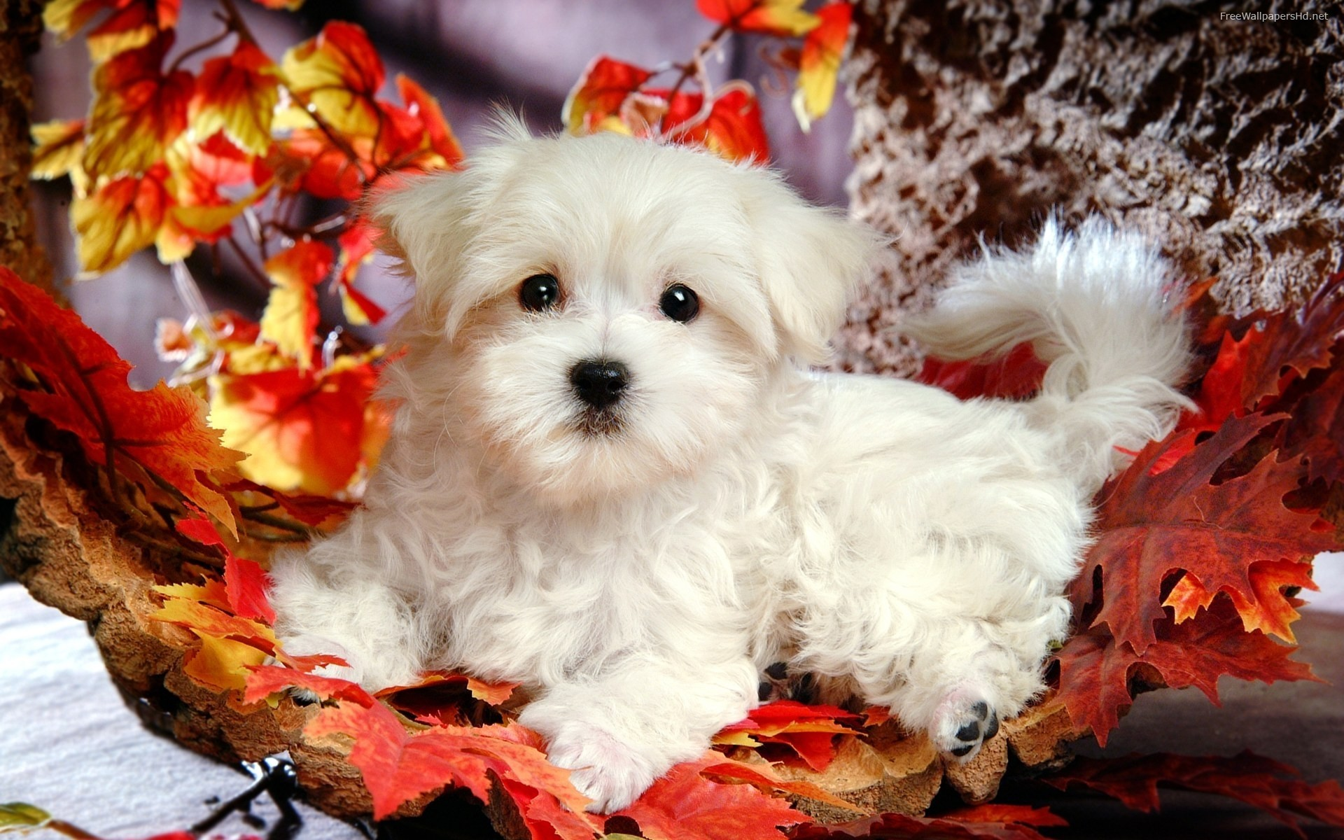Puppies Cute Wallpapers 1