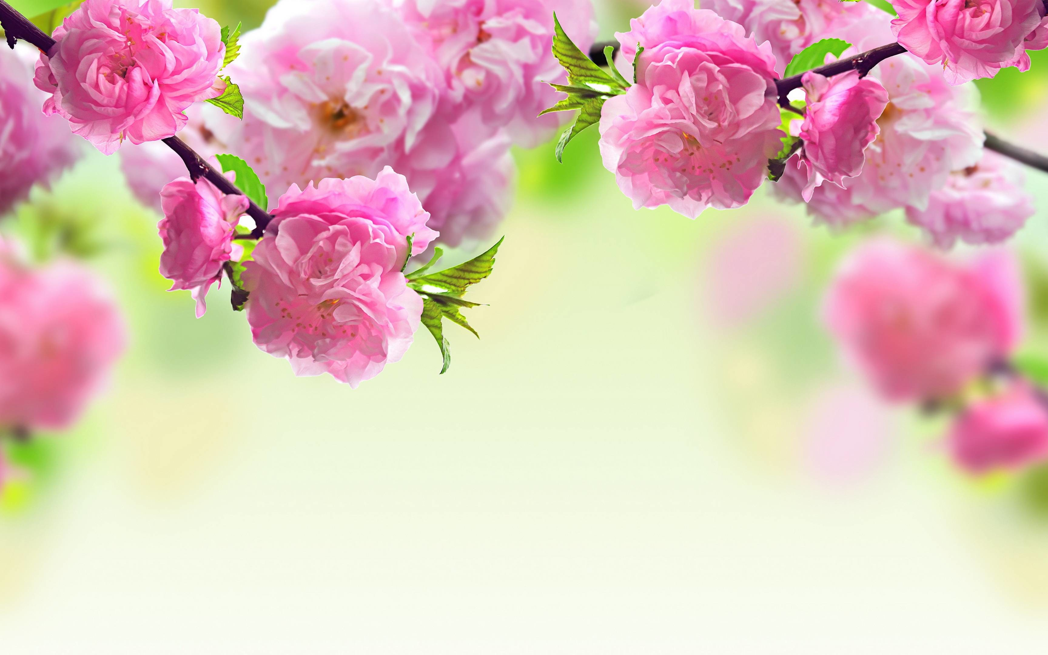 Pink Flower Backgrounds Wallpapertag