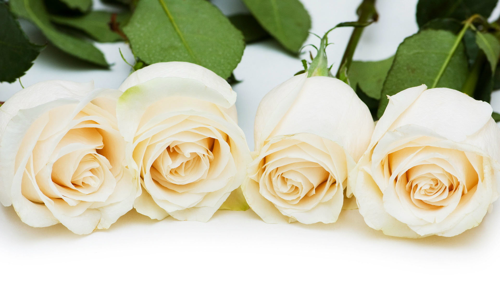 White Flowers Free Hd Wallpapers