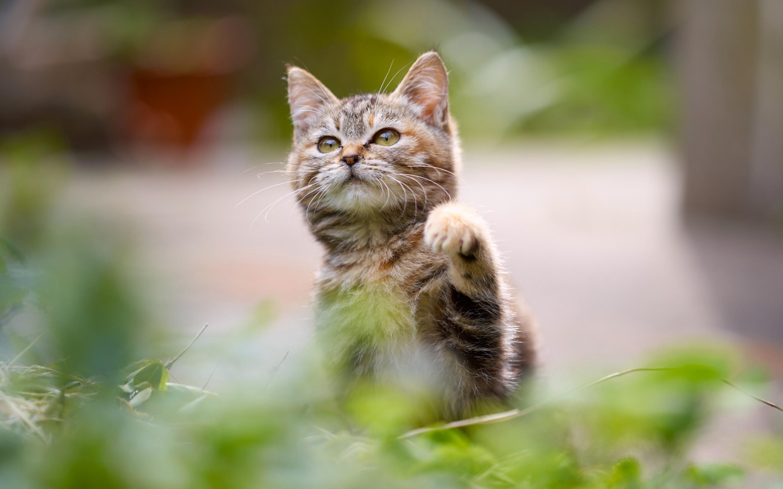 purina muse cat food