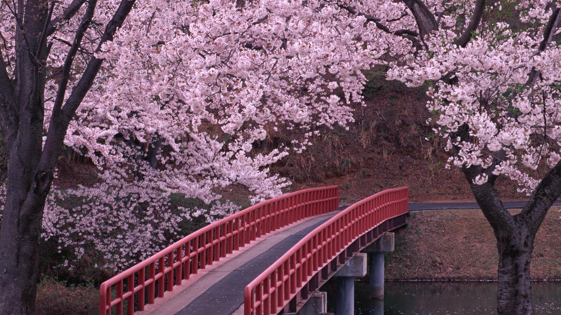 1920x1080 Eleletsitz Spring Japanese Garden Wallpaper Images