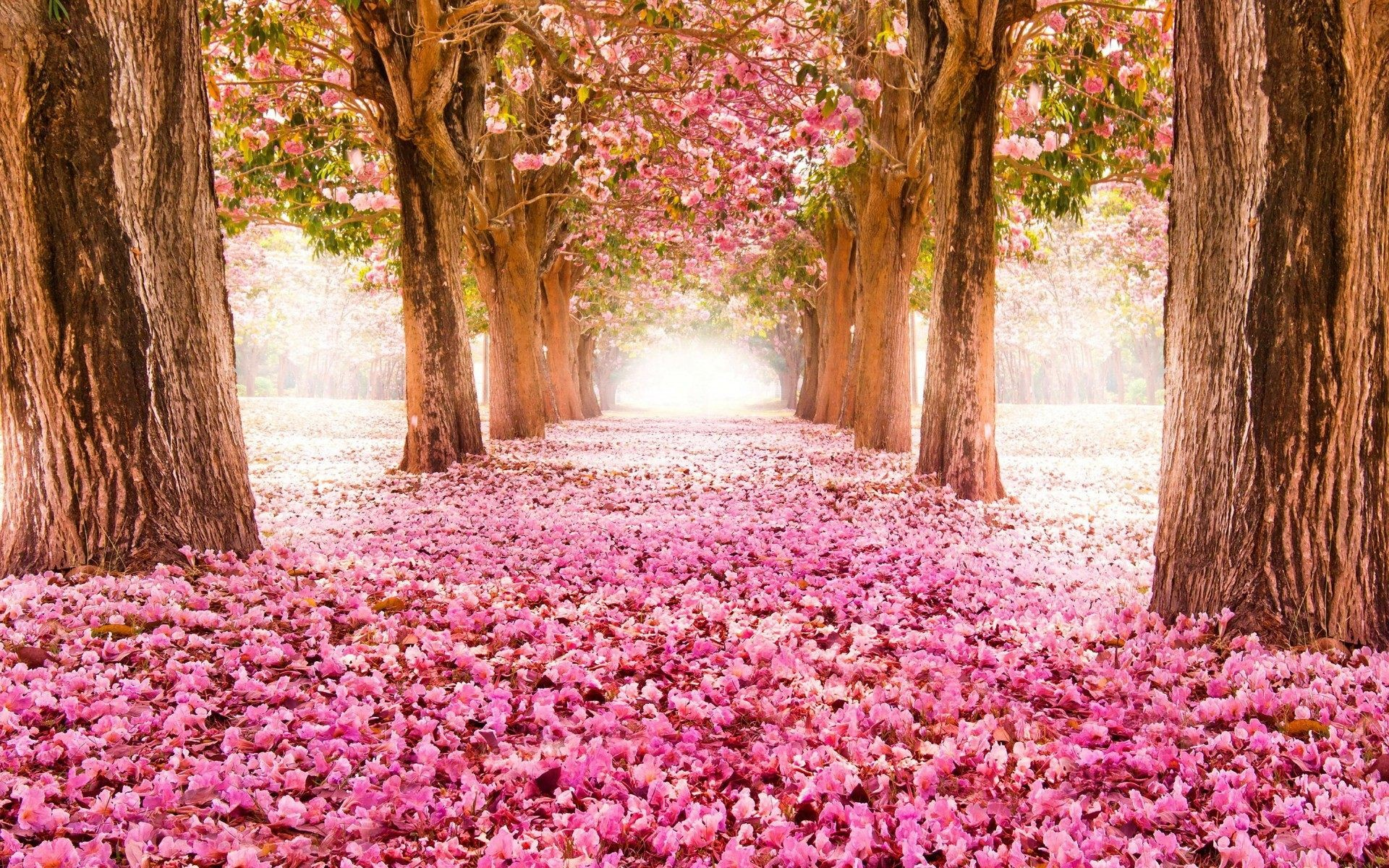 Free Spring Flower Desktop Backgrounds Flowers Healthy