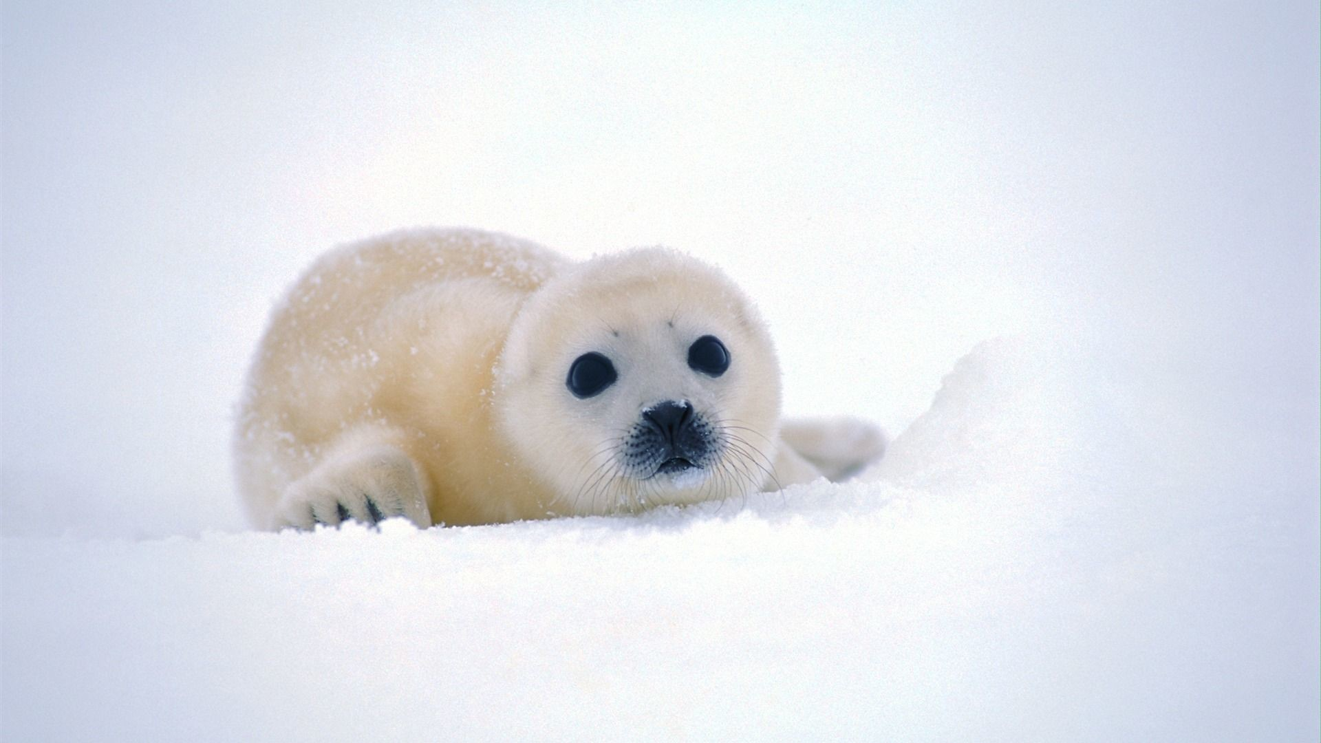 Cute Animal Backgrounds ·①