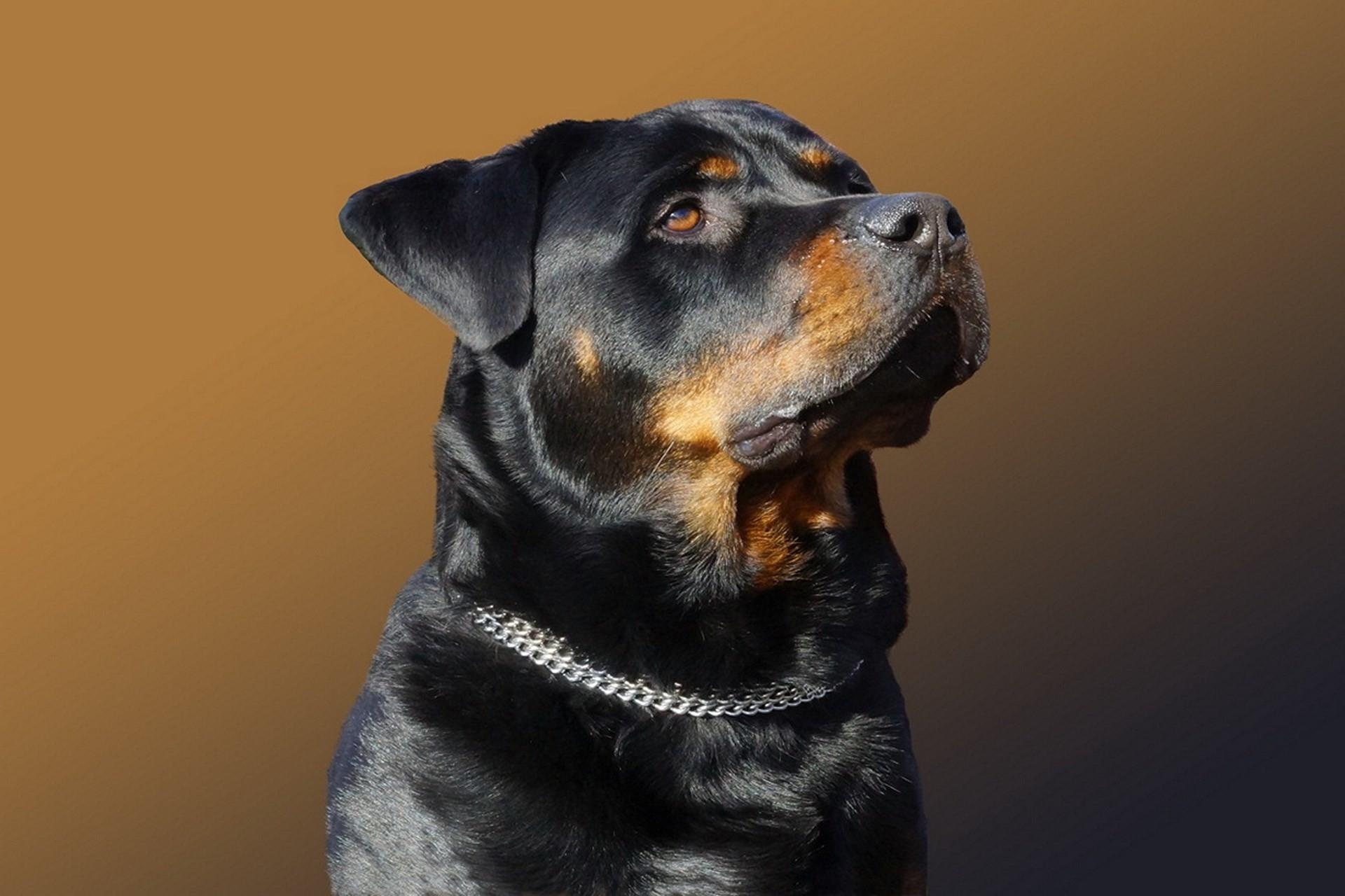 rottweiler dog names - 1280×680
